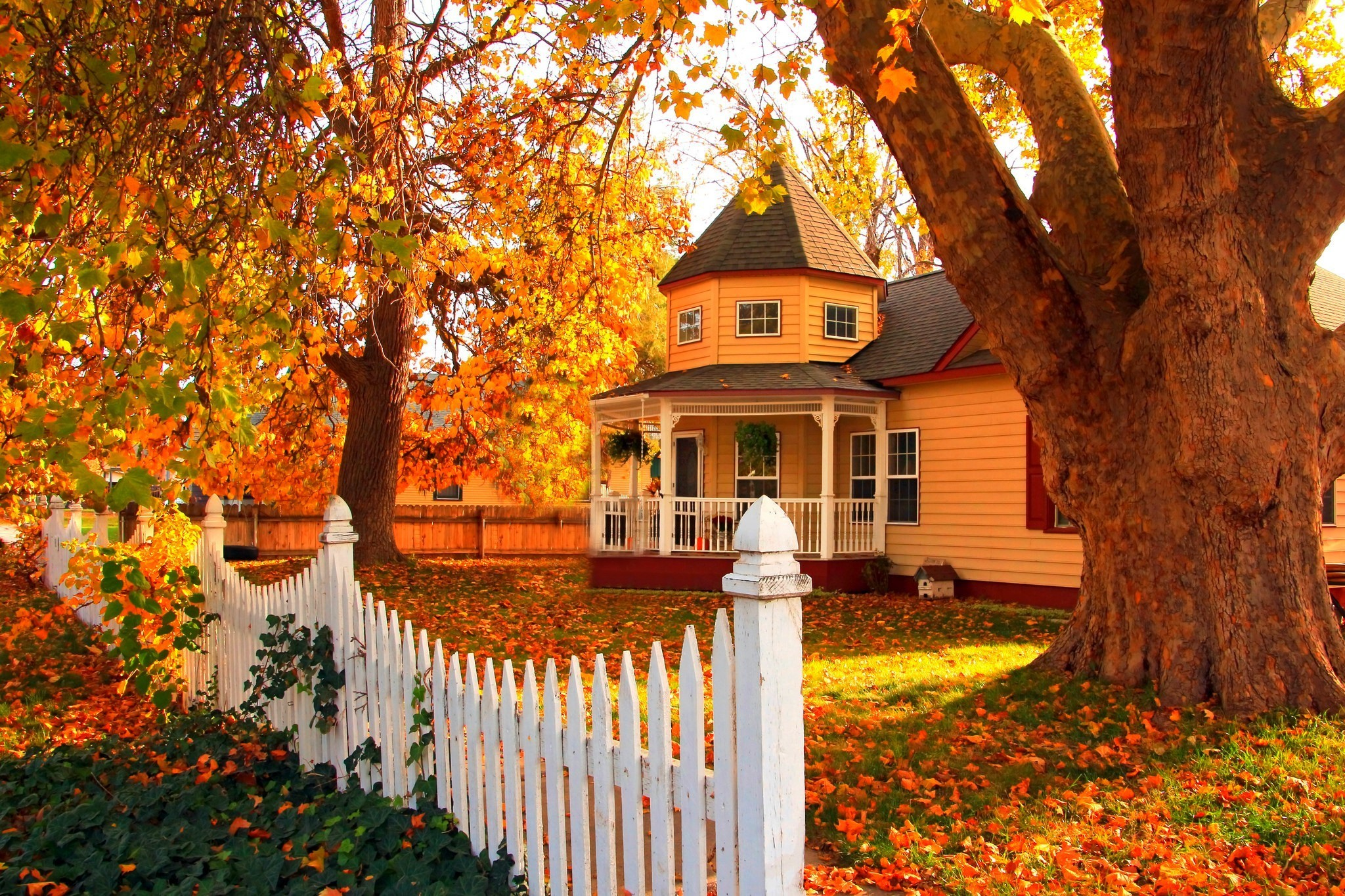 Man Made – House Man Made Orange Architecture Fence Fall Tree Leaf Wallpaper