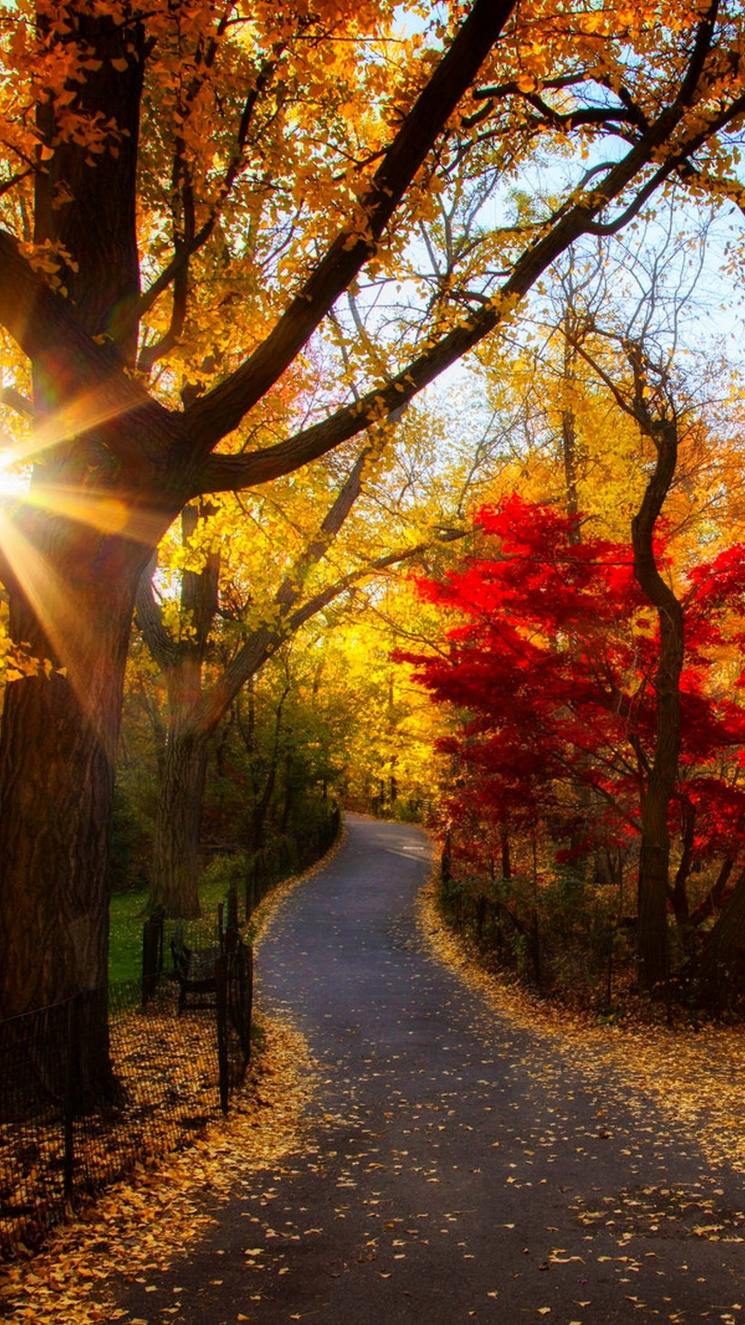 Fall morning foliage path Would love to walk here