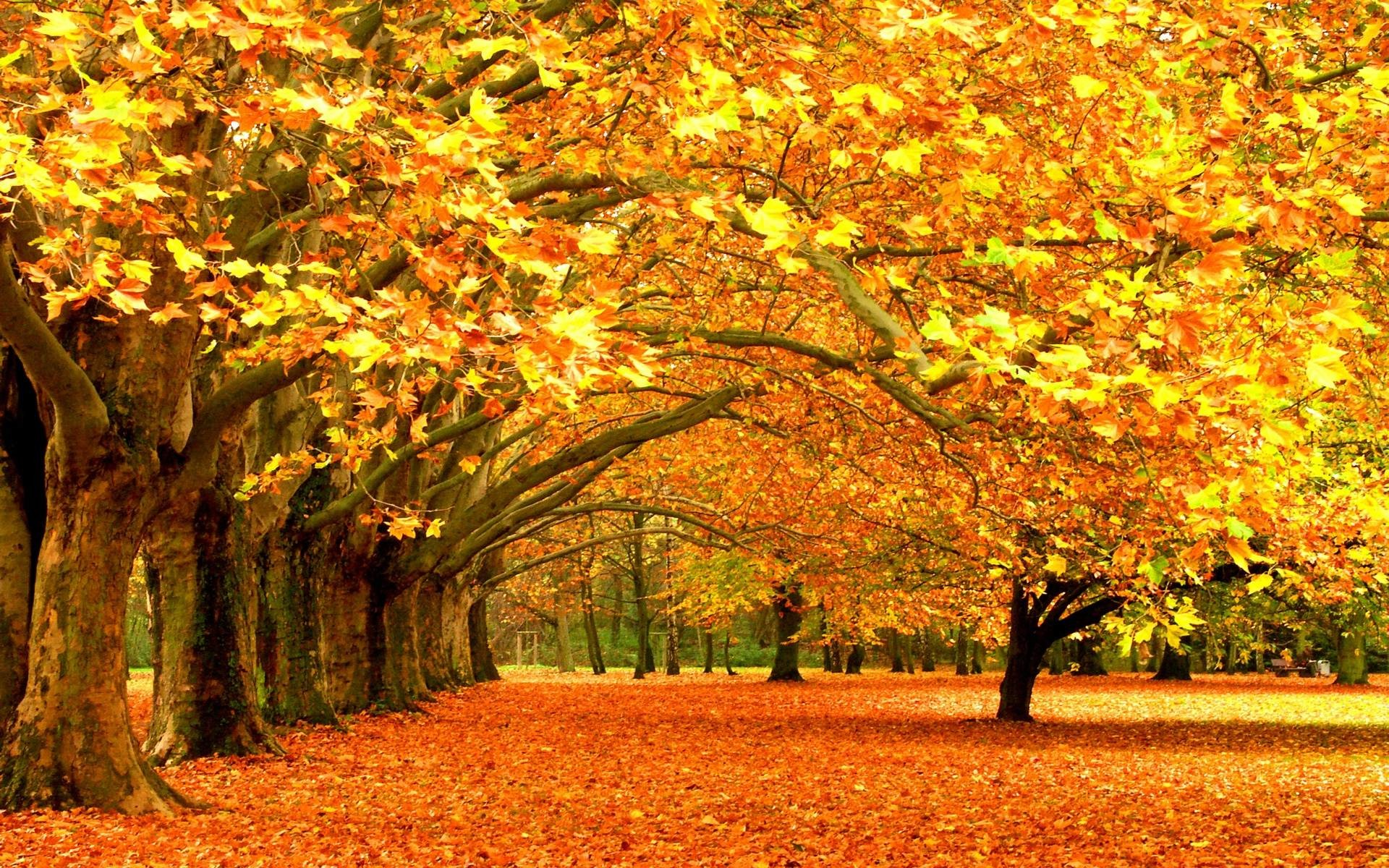 High resolution fall backgrounds for computer clipart