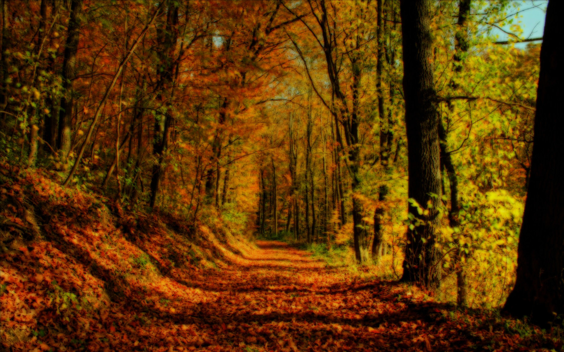 Fall Forest Backgrounds HD wallpaper background