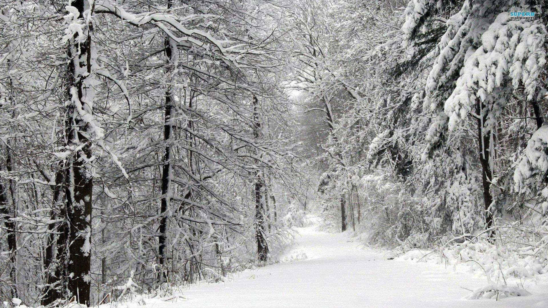 Explore Forest Wallpaper, Winter Snow, and more!