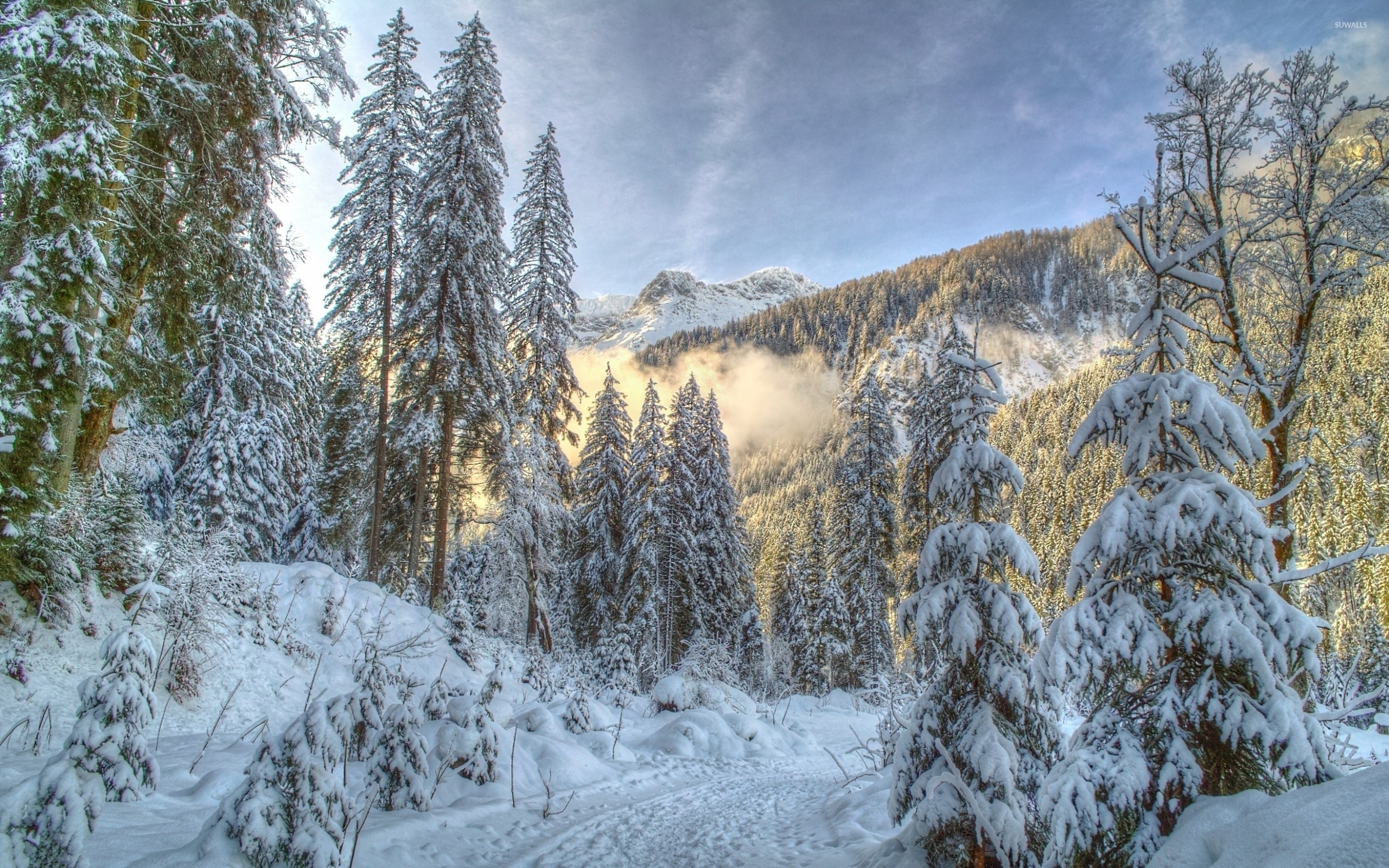 … fog rising from the snowy forest 5 wallpaper nature wallpapers …