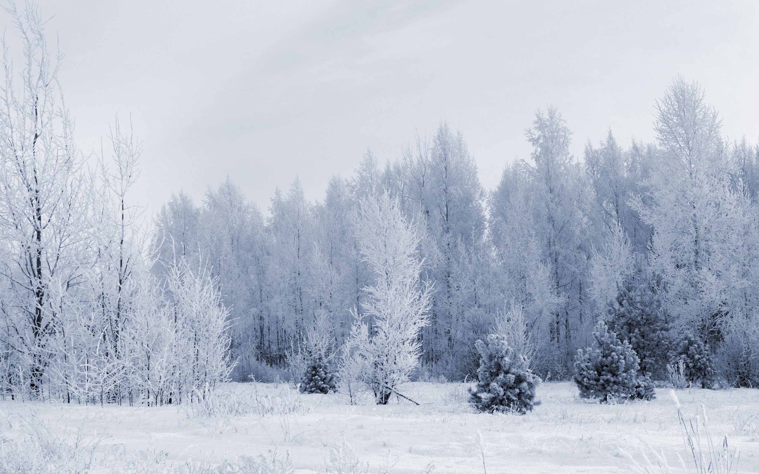 Snow Forest Panorama 718716