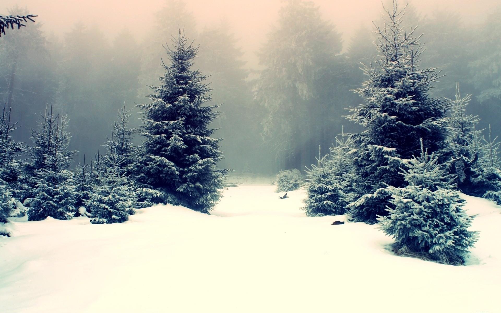 Winter Snow Wallpaper Winter, Snow, Forest
