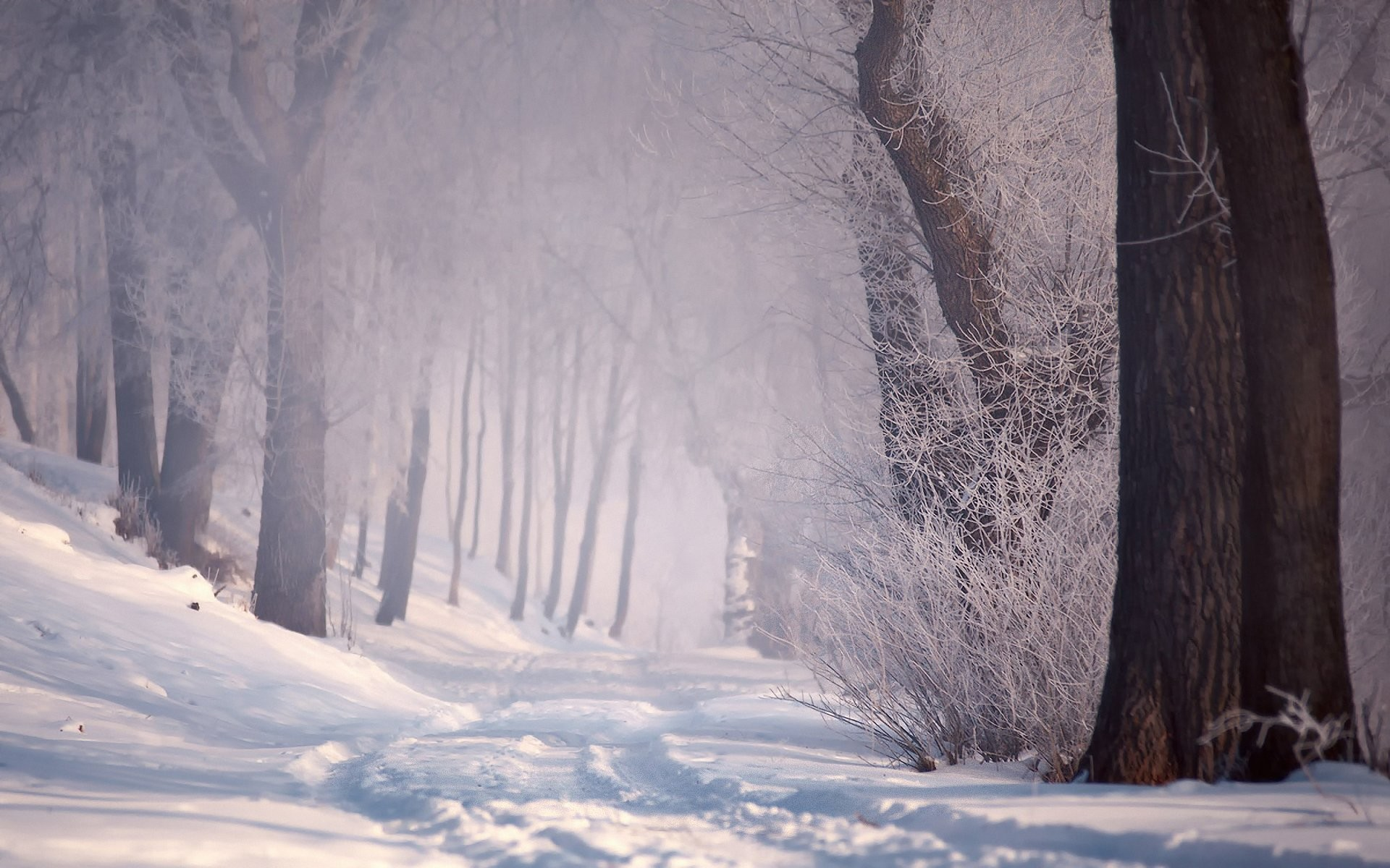 winter snow forest road