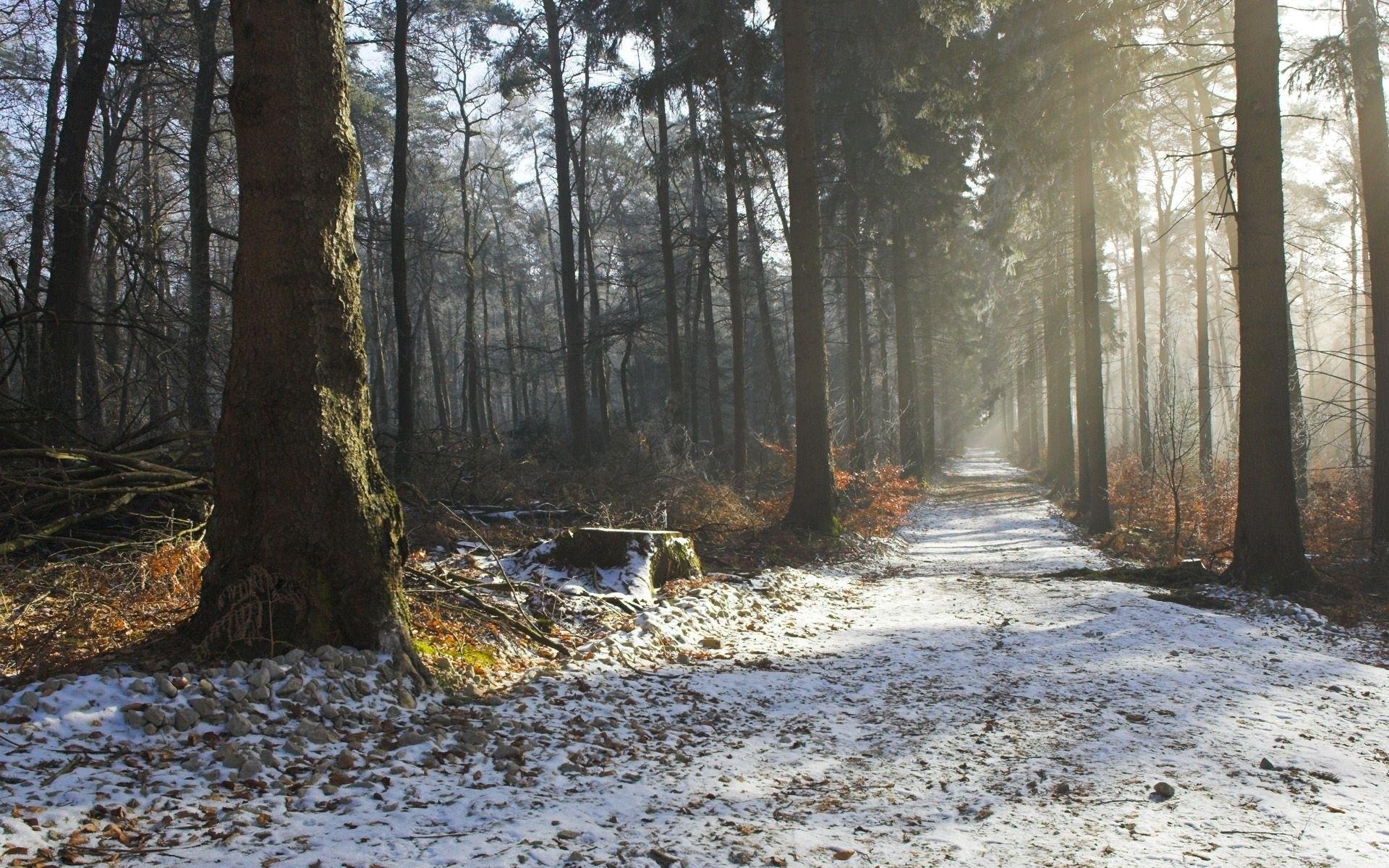 Nature landscapes trees forest roads path trail sunlight sunbeam fog haze  winter snow seasons wallpaper     27465   WallpaperUP