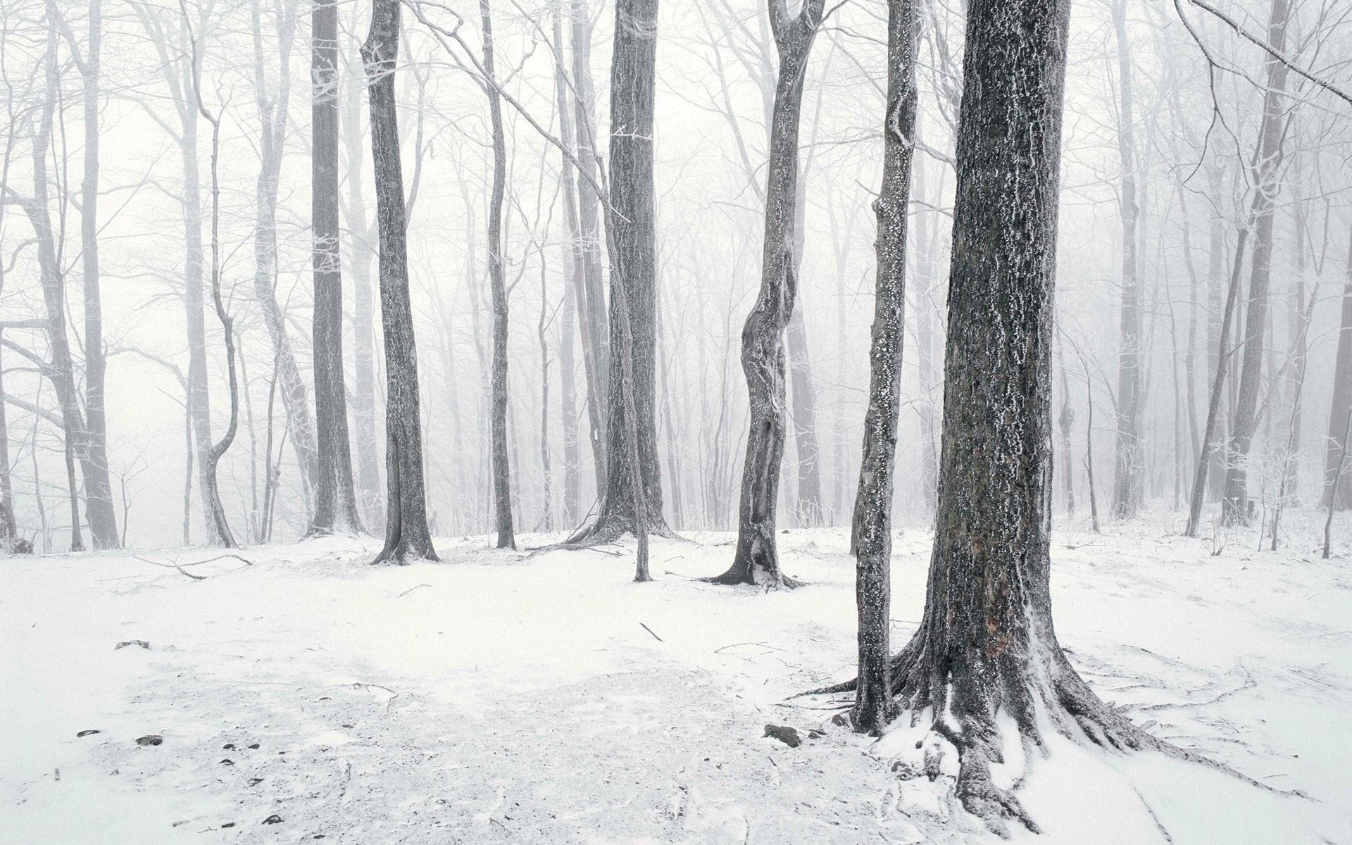landscape, Snow, Forest Wallpapers HD / Desktop and Mobile .