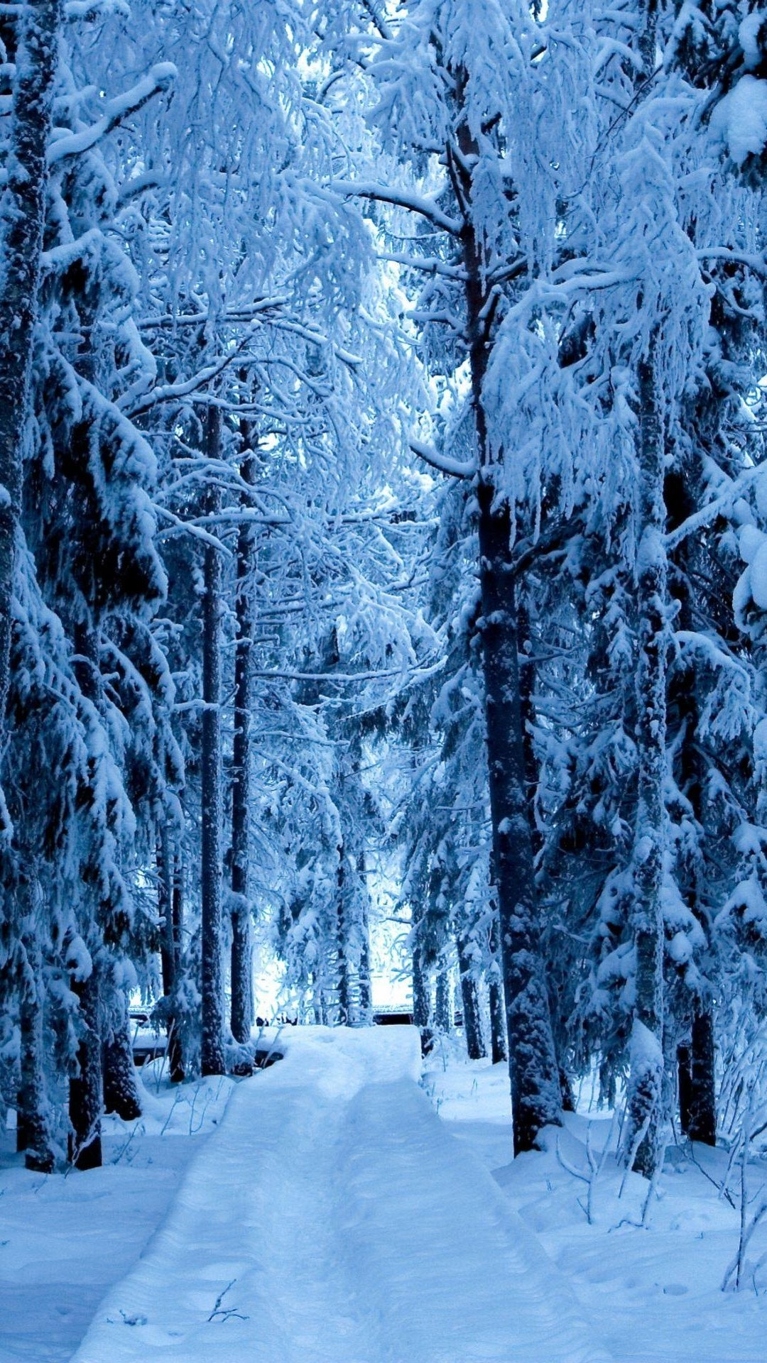 Snow Forest Blue Ice Android Wallpaper …