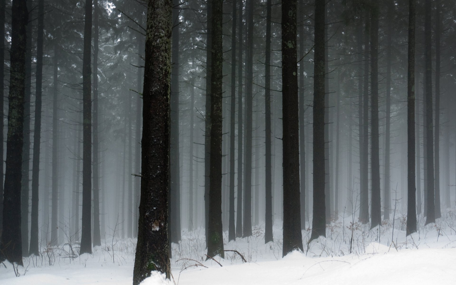 winter nature winter snow frost cool forest tree tree trunks snow winter  wallpapers