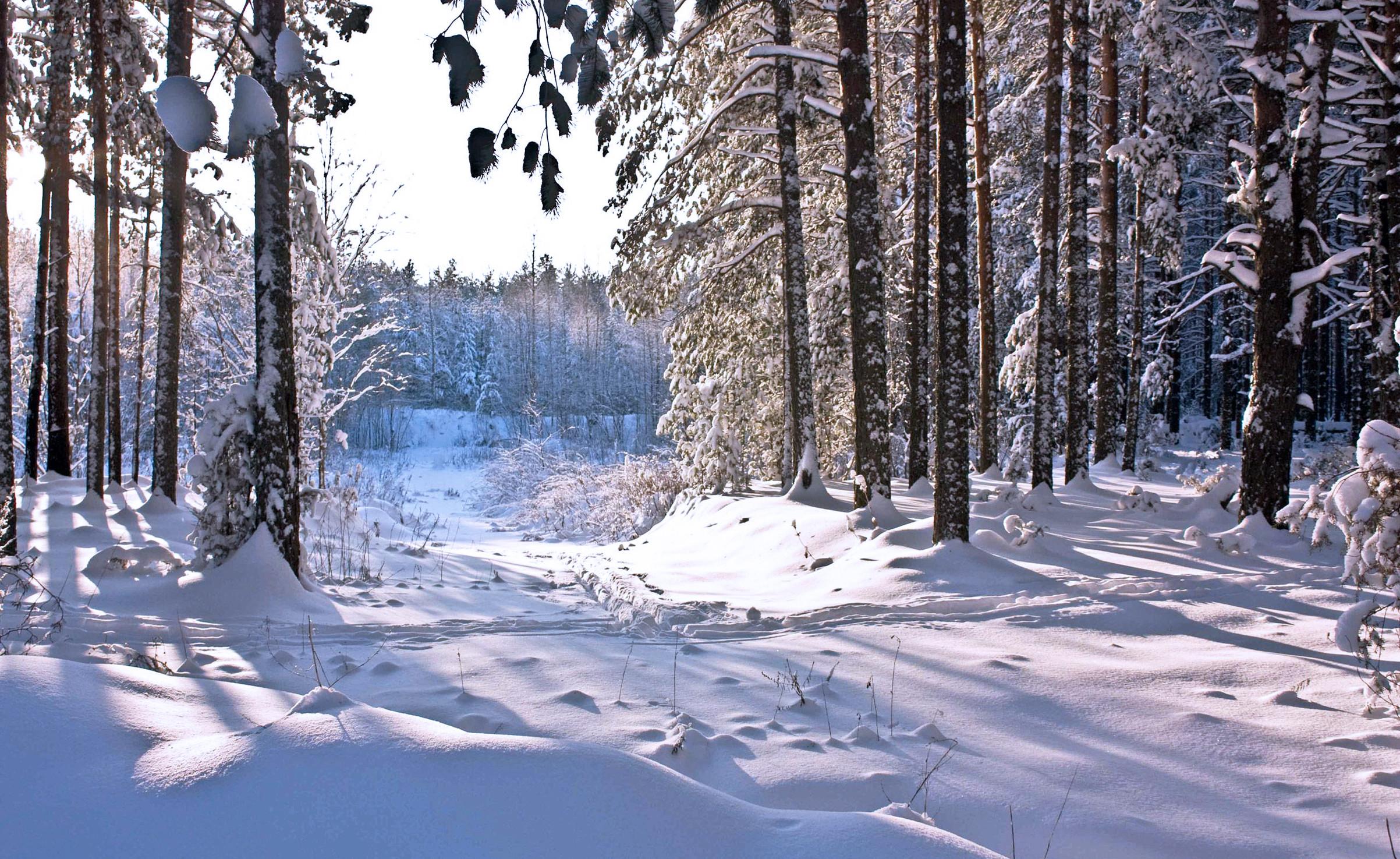 Wallpaper winter, snow, forest, winter, snow, forest, sun .