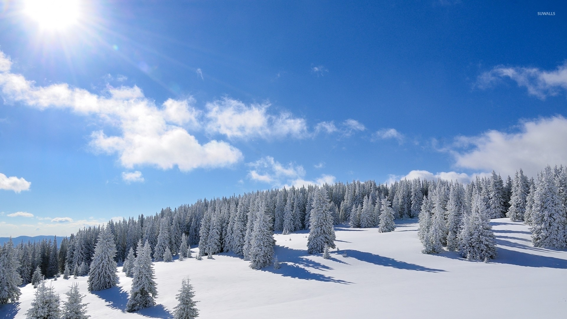 Amazing bright sun over the snowy forest wallpaper jpg