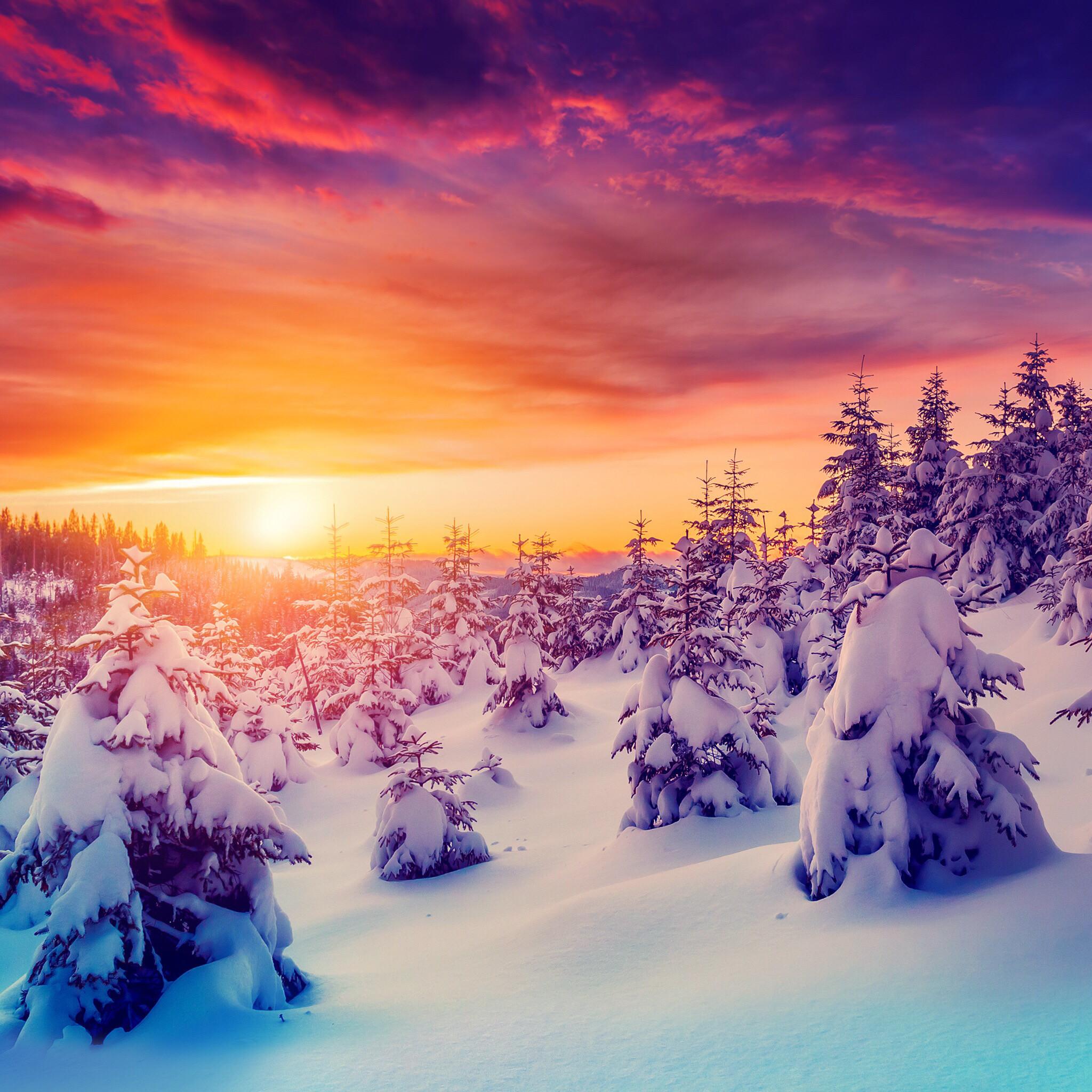 iPad mini Retina, Sunset, Sundown, Sun, Snow, Forest, Frost –