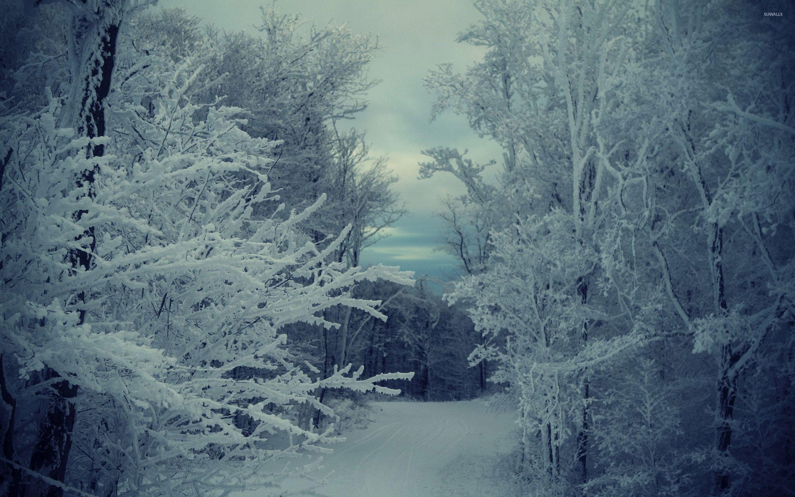 Path through the snowy forest wallpaper jpg