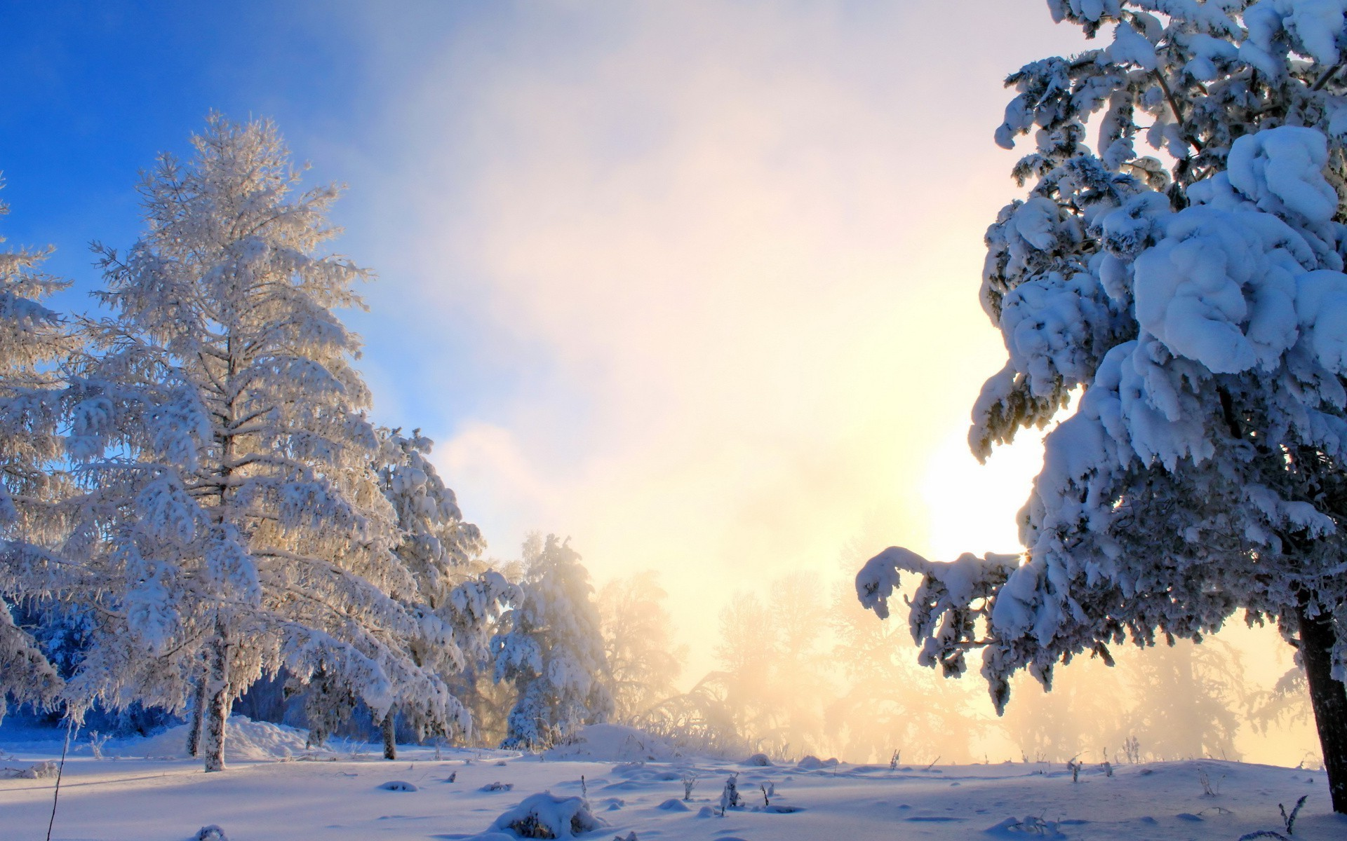 nature, Landscape, Snow, Forest Wallpapers HD / Desktop and Mobile  Backgrounds