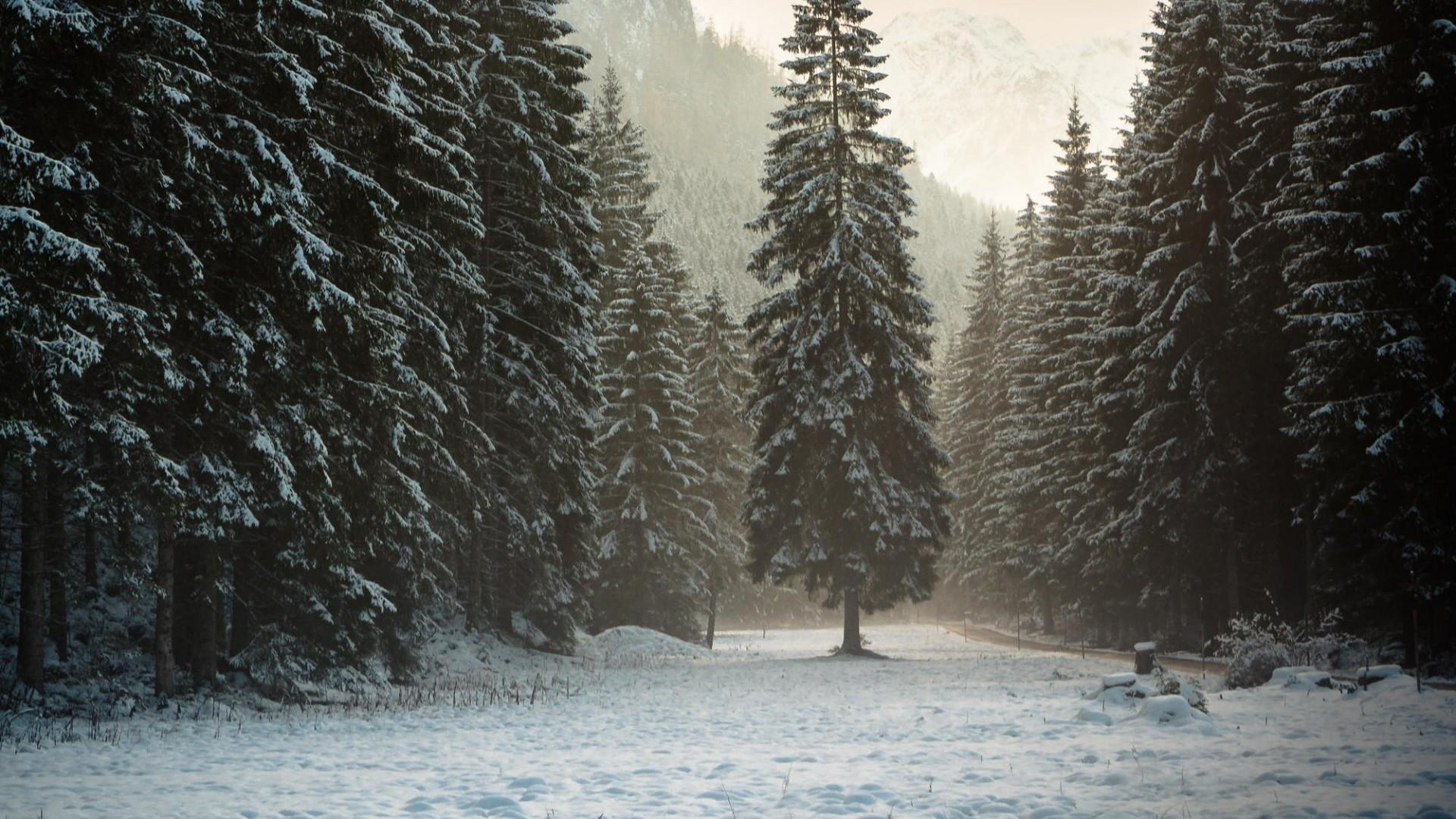 Wallpaper austria, tyrol, alps, mountains, forest, snow, winter