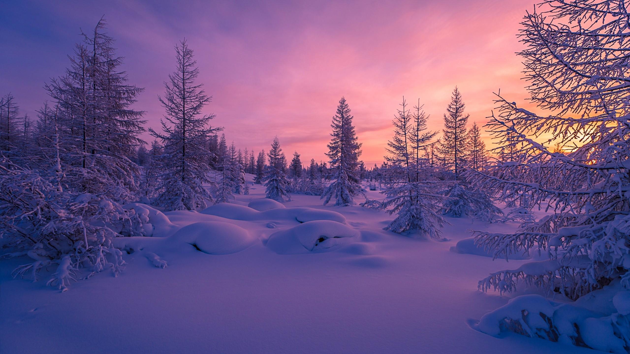 Nature / Winter forest Wallpaper