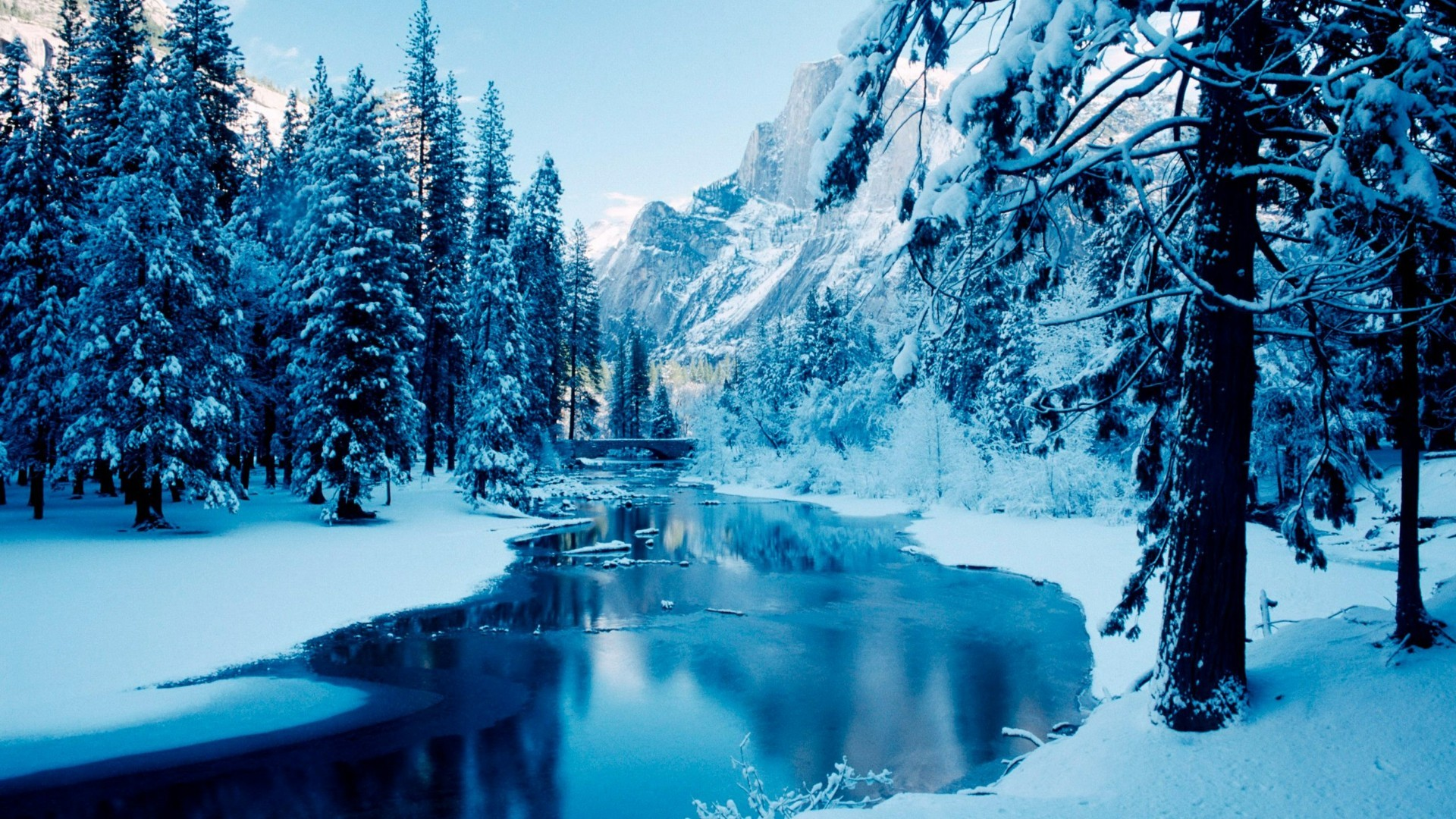 Title. Snowy winter forest