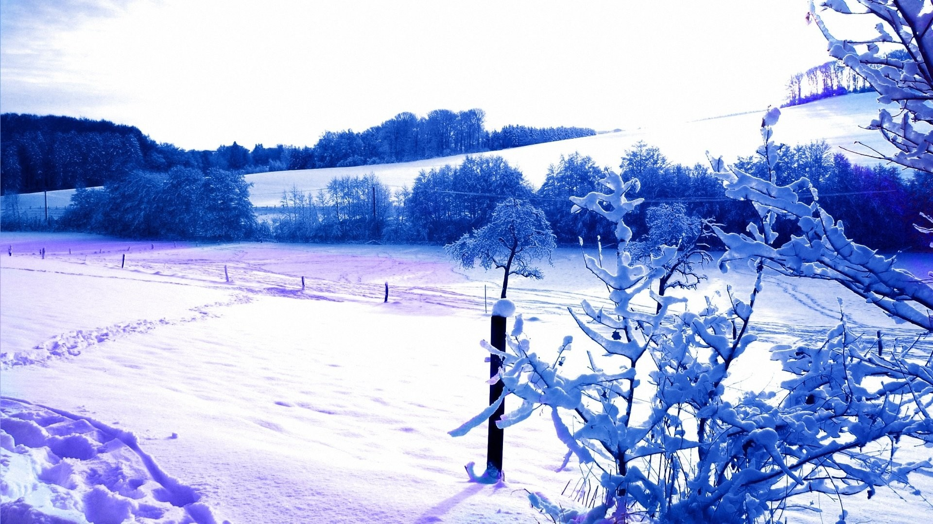 Winters Snow Forest Original Zima Gdefon 763198