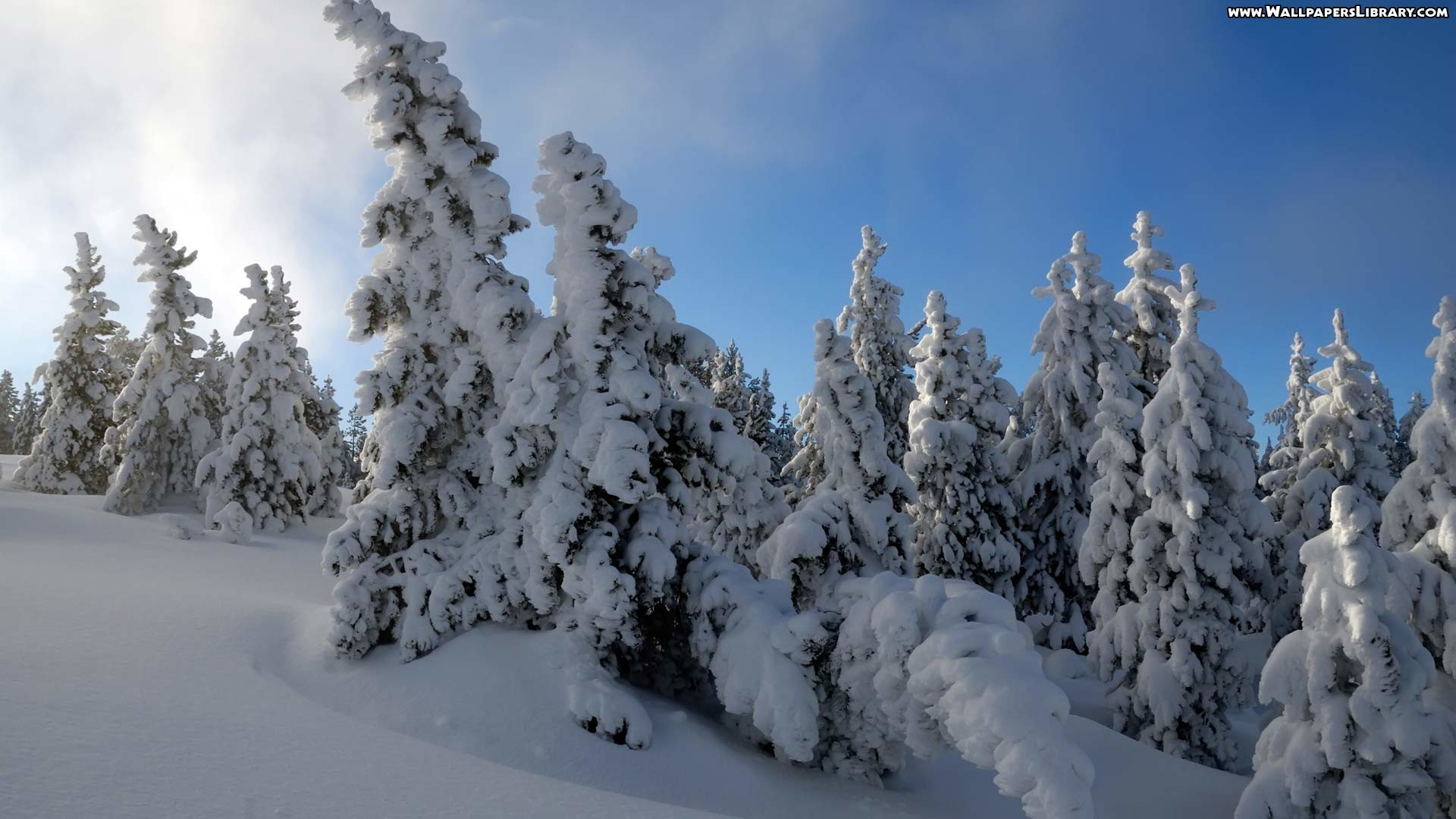 Snow Forest Wallpaper 8498 Hd Wallpapers in Nature – Imagesci.com