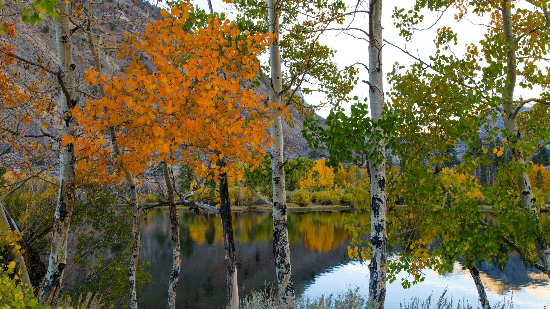 Autumn Tag – Birch Autumn Trunk Lake Nature Tree Beautiful Hd Wallpapers  Desktop for HD 16
