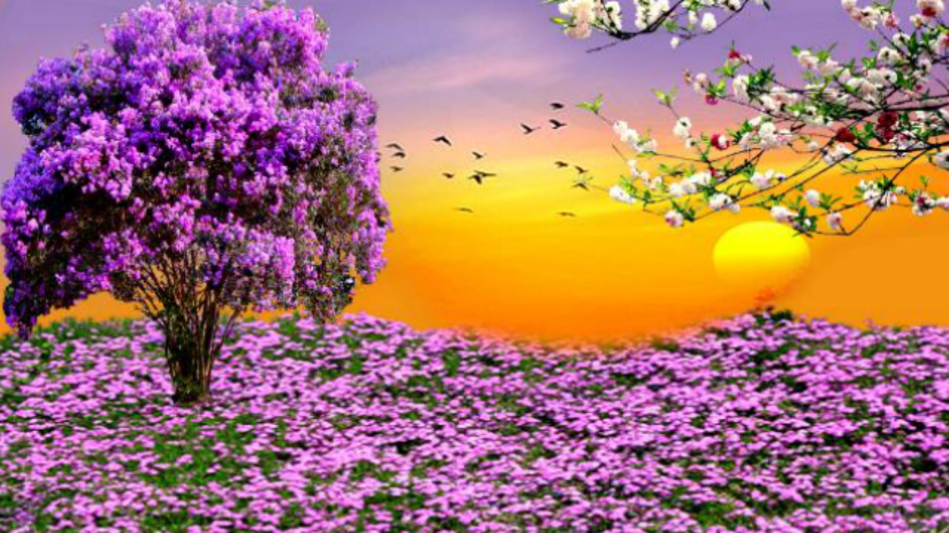 Nature Spring Purple Flowers Garden Sunset HD Wallpapers For Desktop