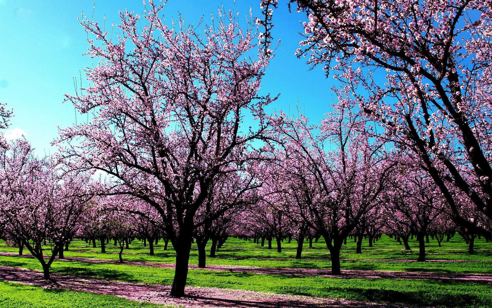 Spring Trees Wallpaper Desktop Hd Widescreen 10 HD Wallpapers .