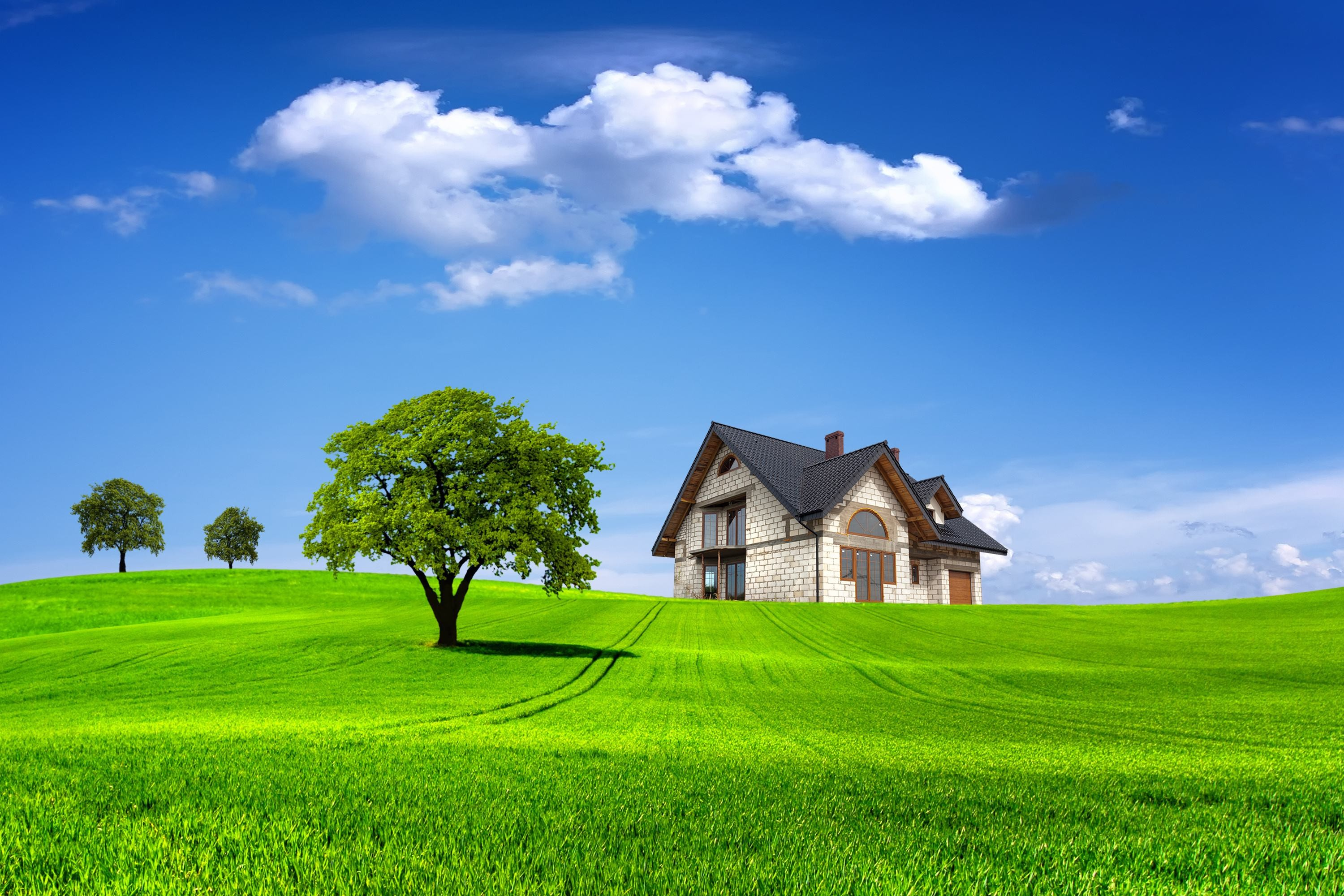 Beautiful nature wallpapers with trees and grass