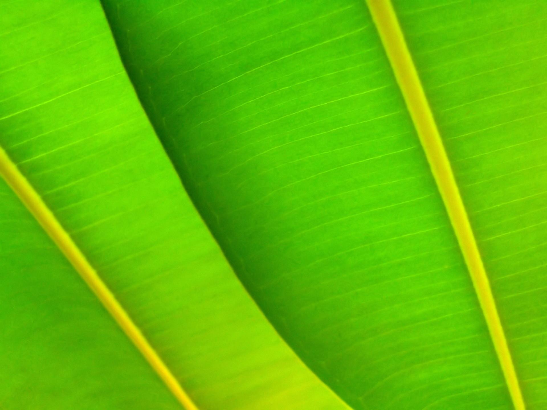 Green leafs Wallpaper Plants Nature