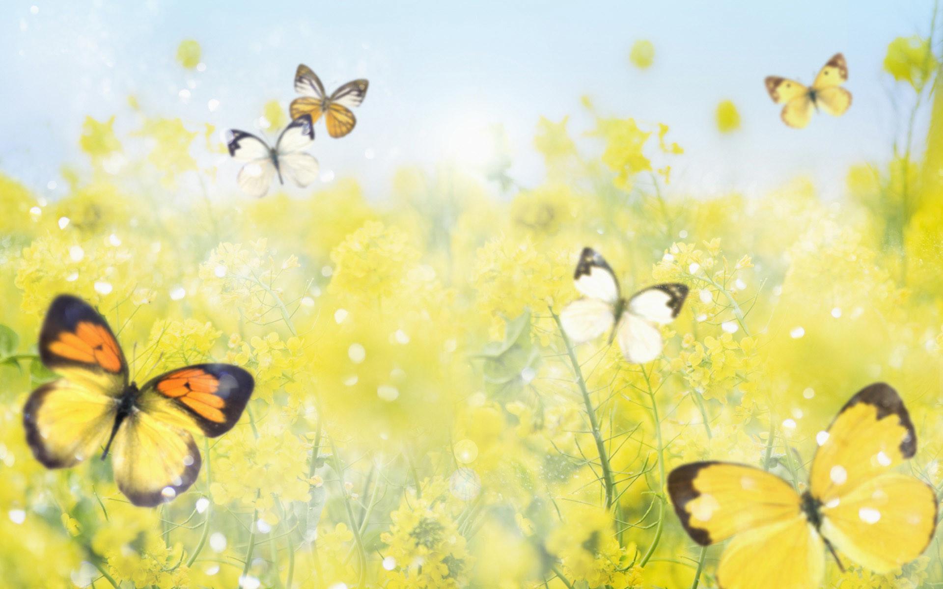 10 best Springtime images on Pinterest   Hd wallpaper, Flower wallpaper and  Nature wallpaper