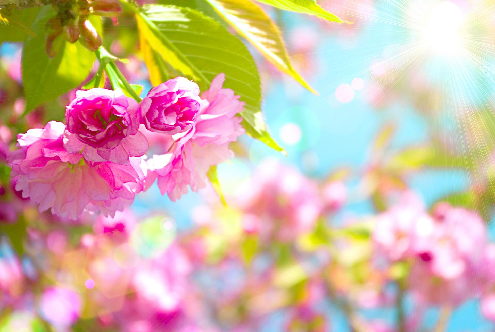 Art Images Spring Desktop Wallpaper HD.