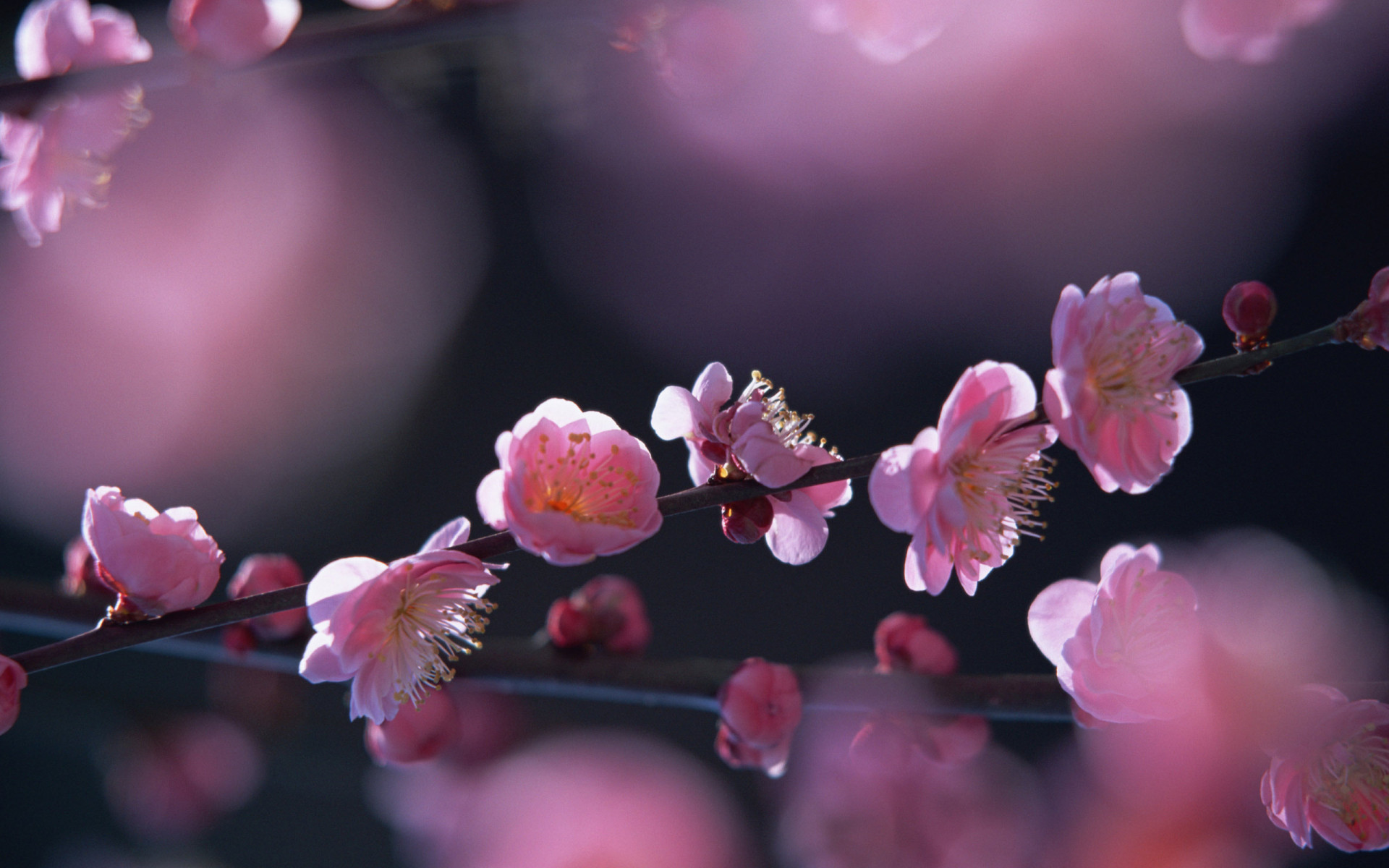 Free Springtime Wallpaper 36862