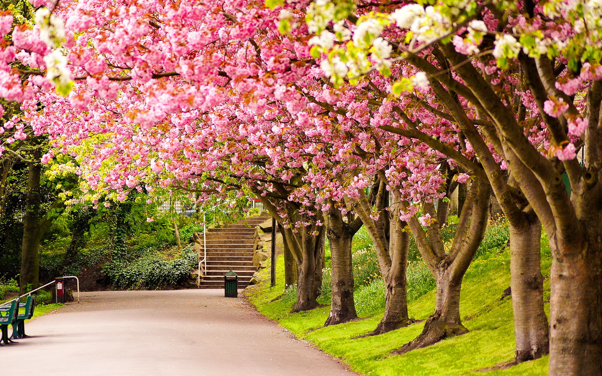 Image for Spring Colours Wallpaper