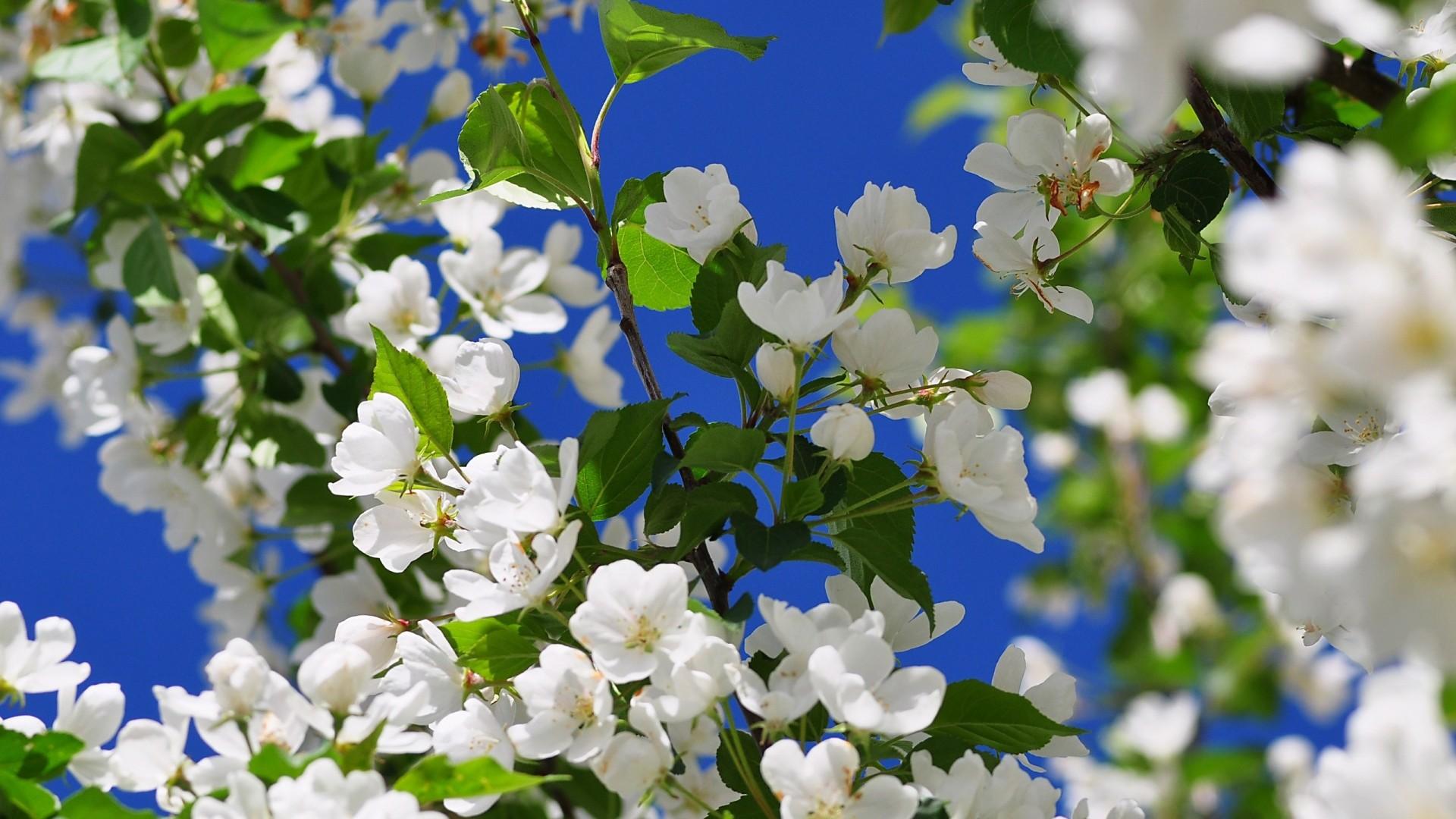 Preview wallpaper spring, branch, flower, tree 1920×1080