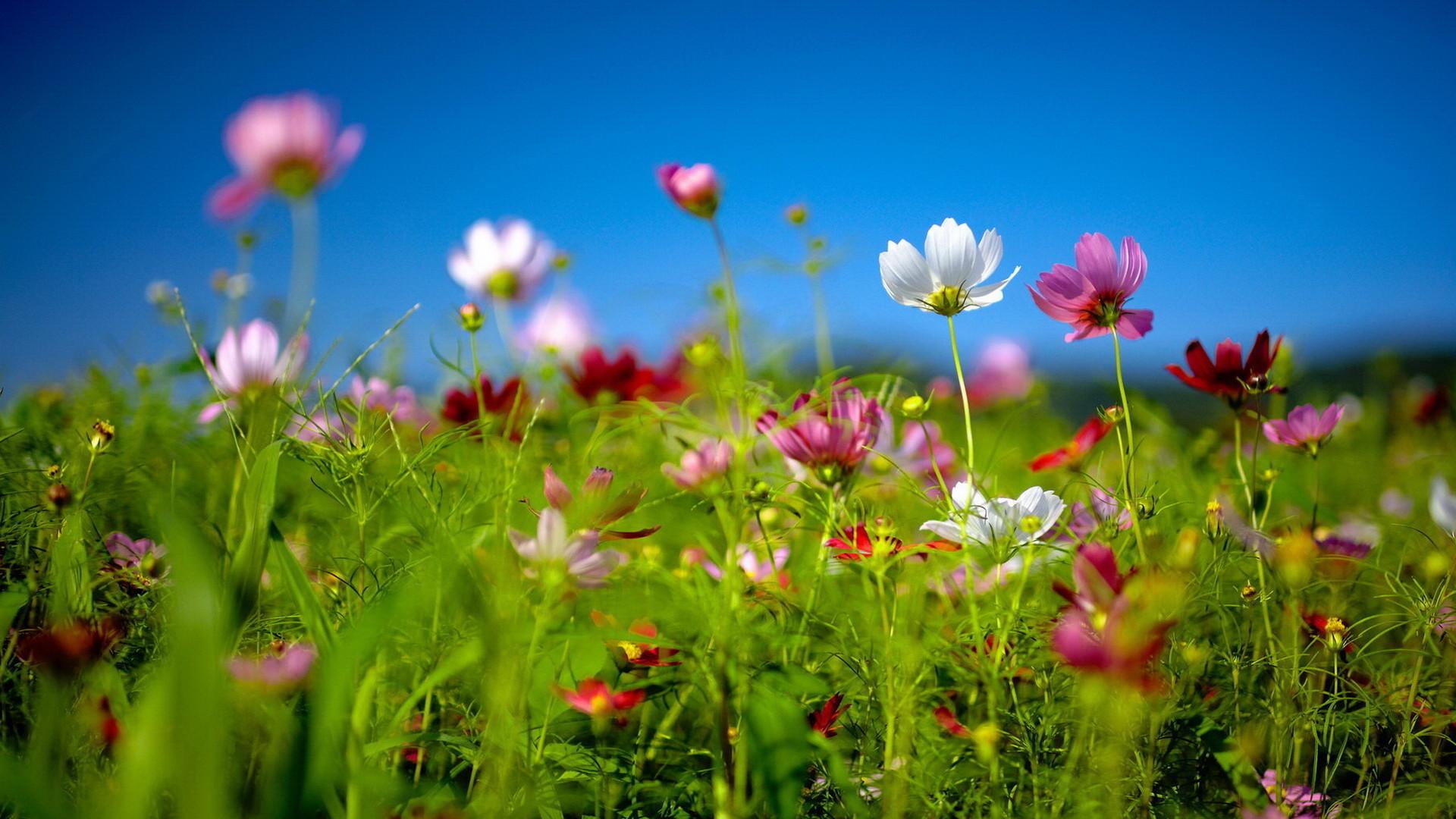 Free Spring Desktop Wallpaper   … Download free Spring wildflowers  Desktop background and wallpapers