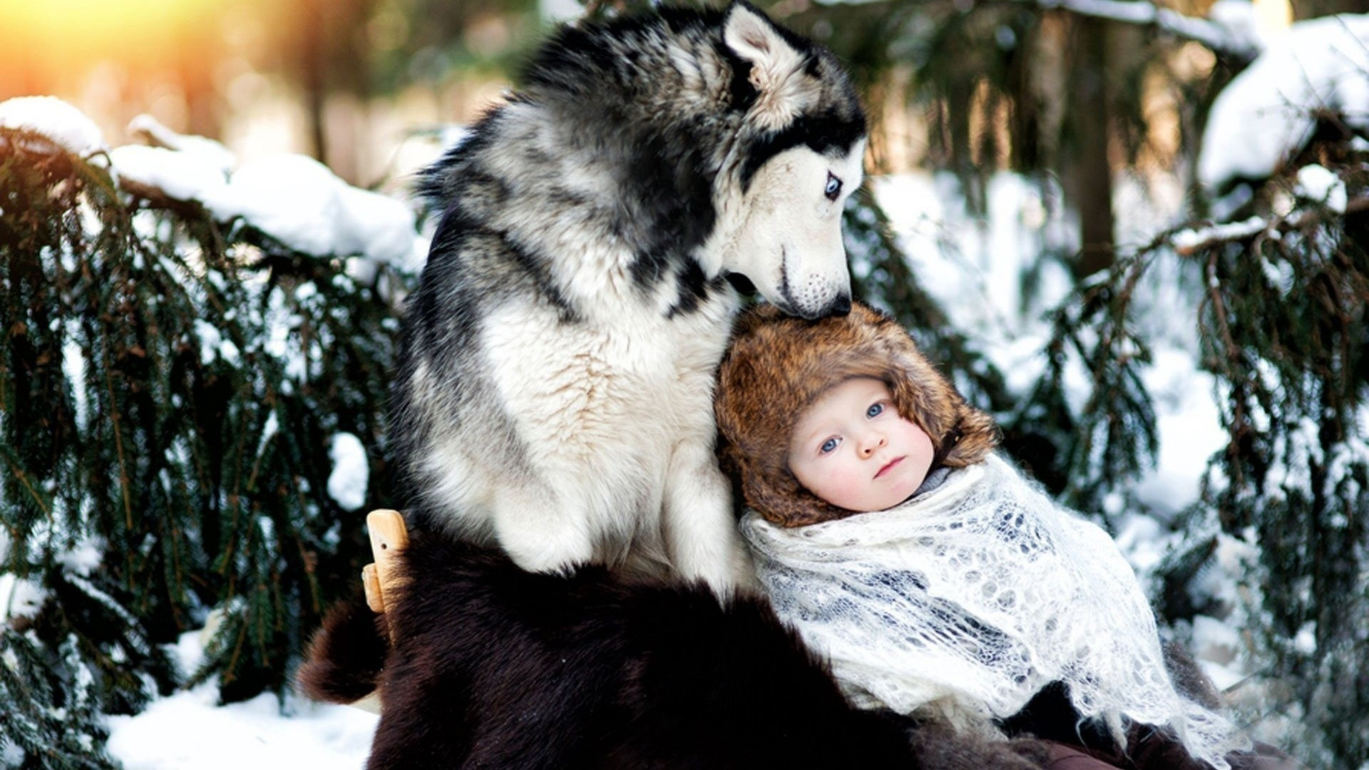 Preview wallpaper dog, husky, baby, care, forest, snow, winter 1920×1080
