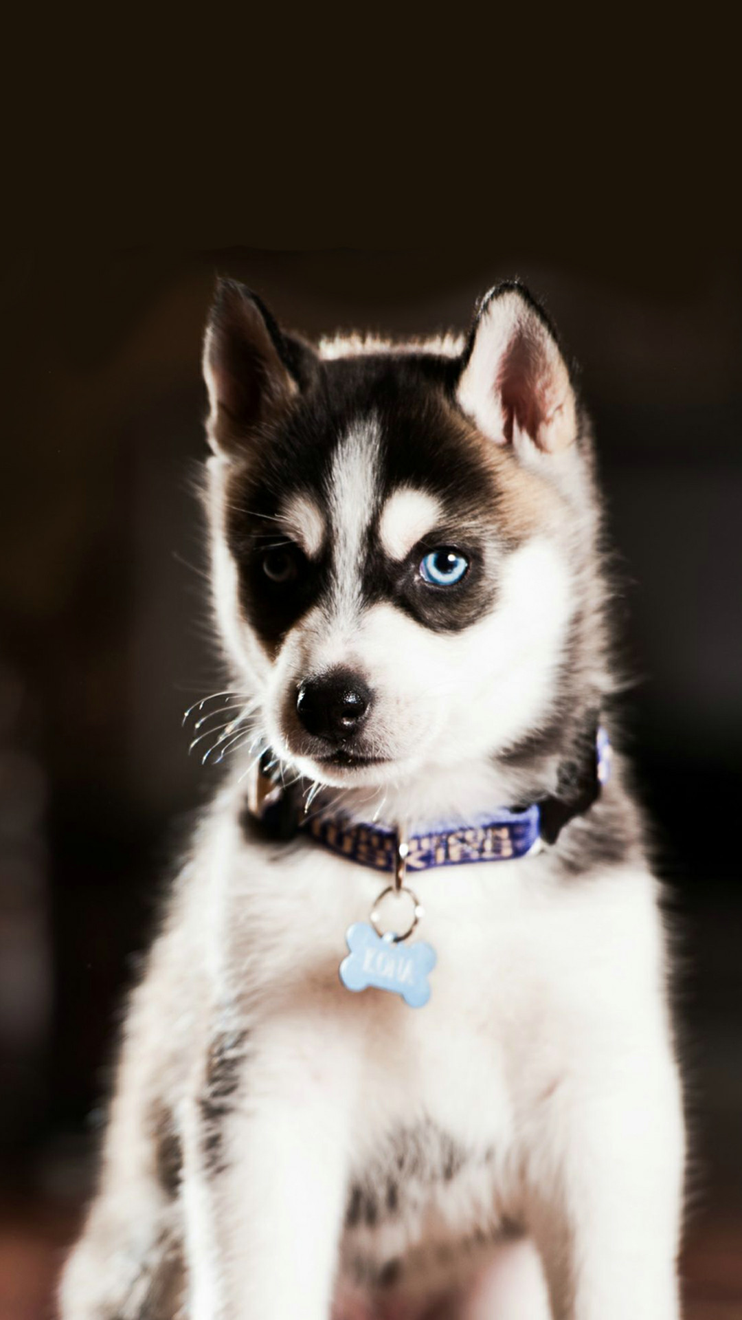 #wallpaper #homescreen #lockscreen #cute #dog Follow me find more cute dog