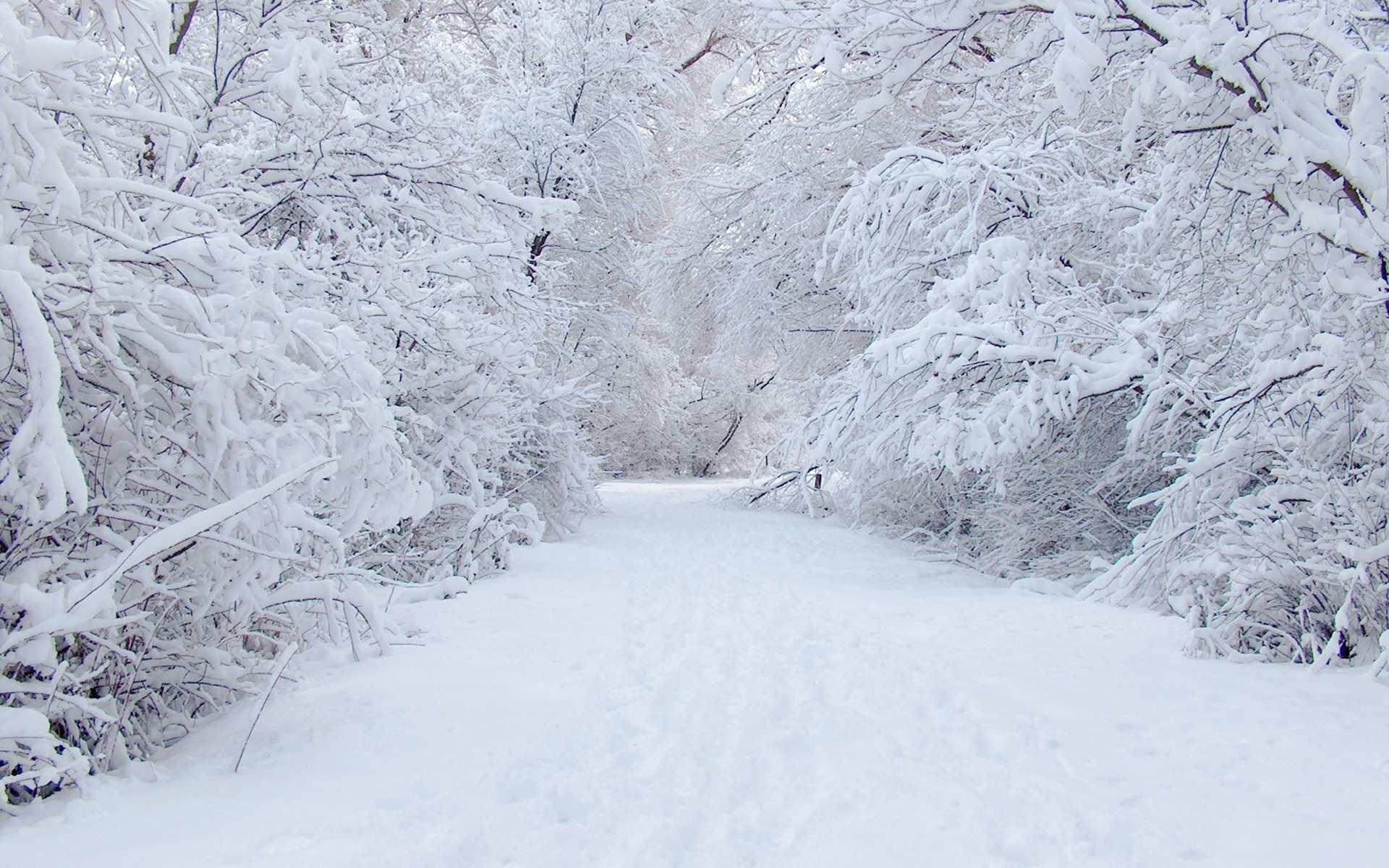 Winter Forest Road Desktop Wallpaper