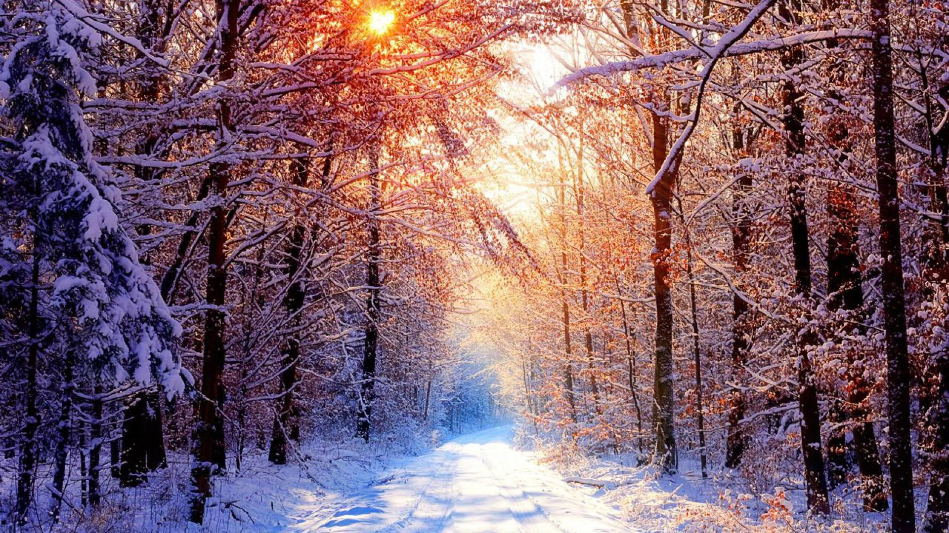 Like or share Creek Winter Forest Wallpapers X Winter Snowy Forest .