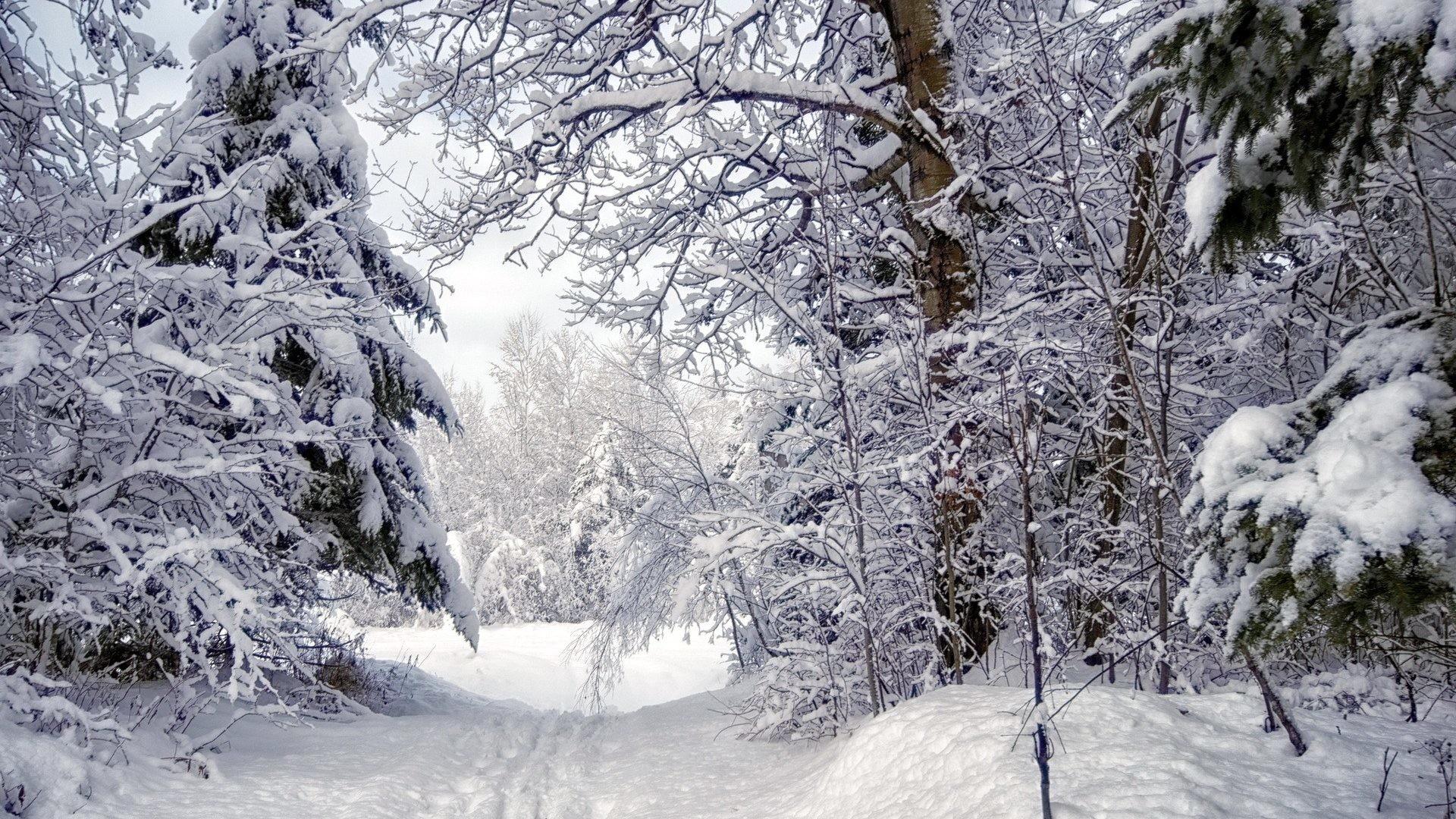 Winter Forest Snow Trees Path Night Desktop Wallpaper Detail