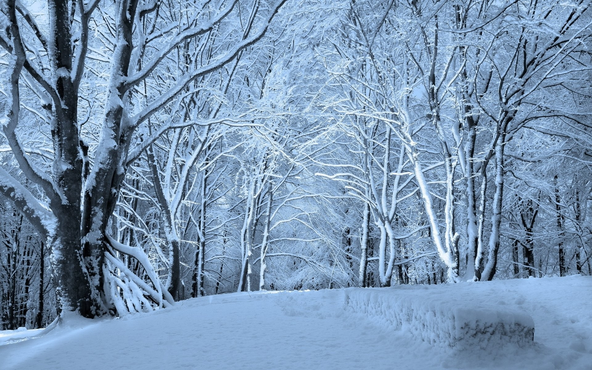 Winter Forest Snow 762353