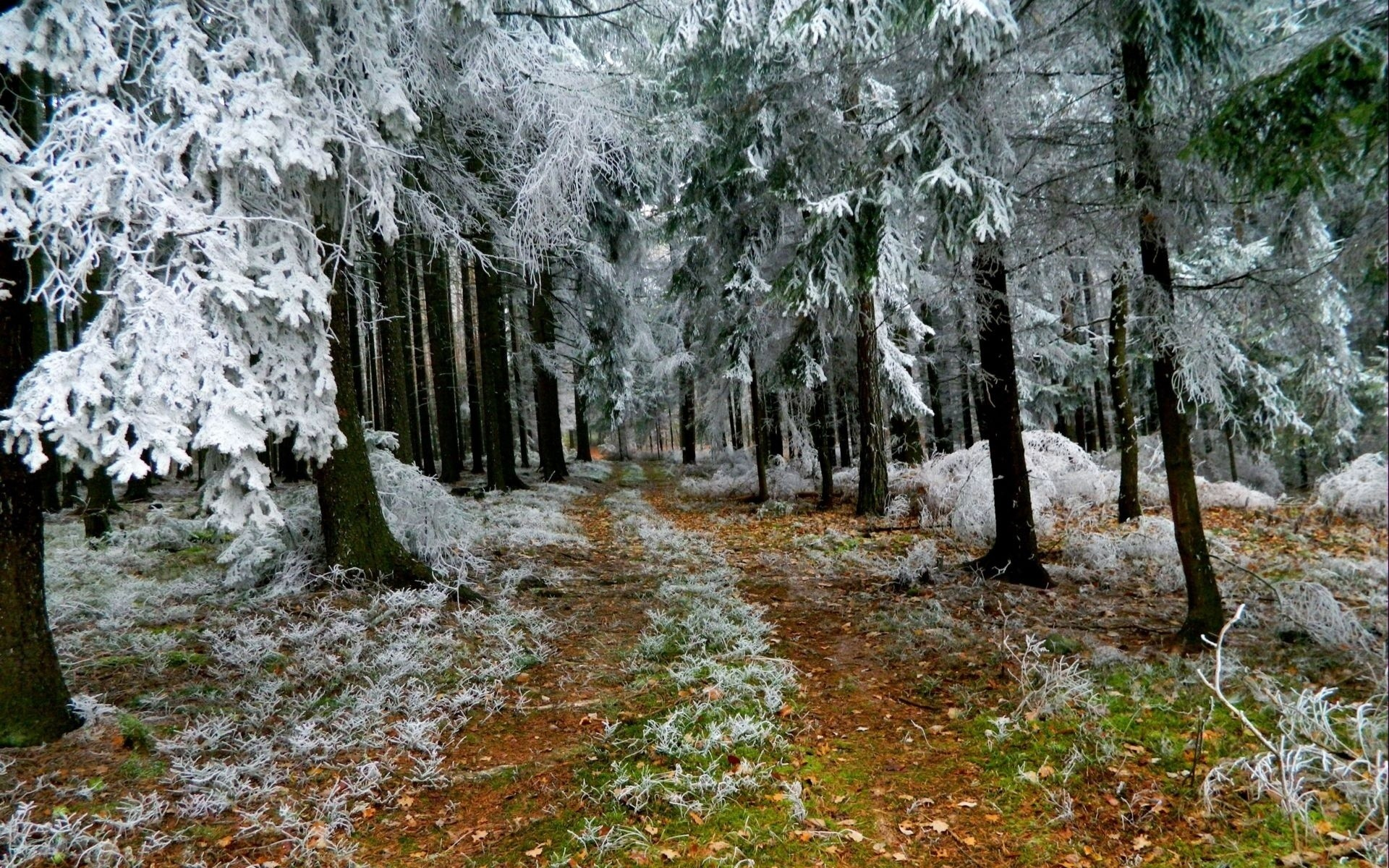 Winter Frost   Winter, frost, forest trees, the trail, nature Desktop  Wallpapers