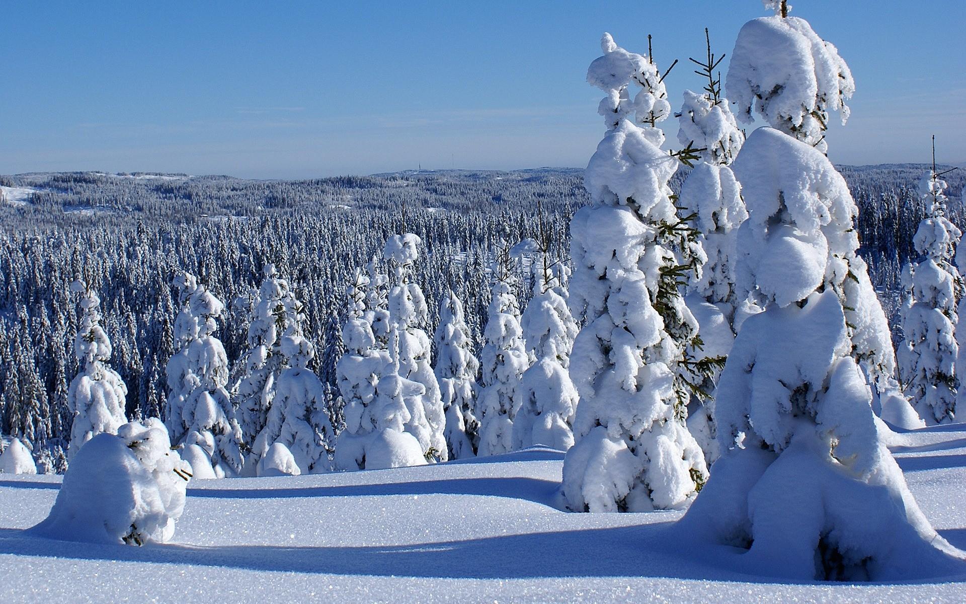 Free HD Winter Forest Nature Desktop Wallpaper