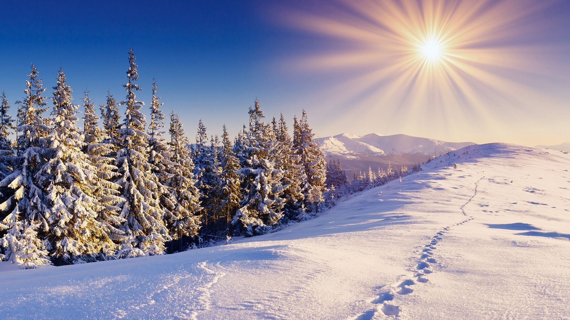 Mountain winter forest wallpapers and images – wallpapers .