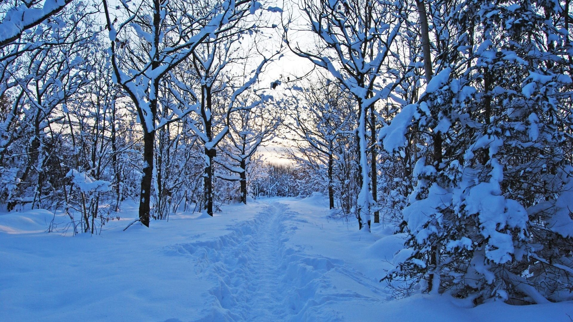 Snow Trail Trees Path Winter Forest Nature Desktop Wallpaper  Detail