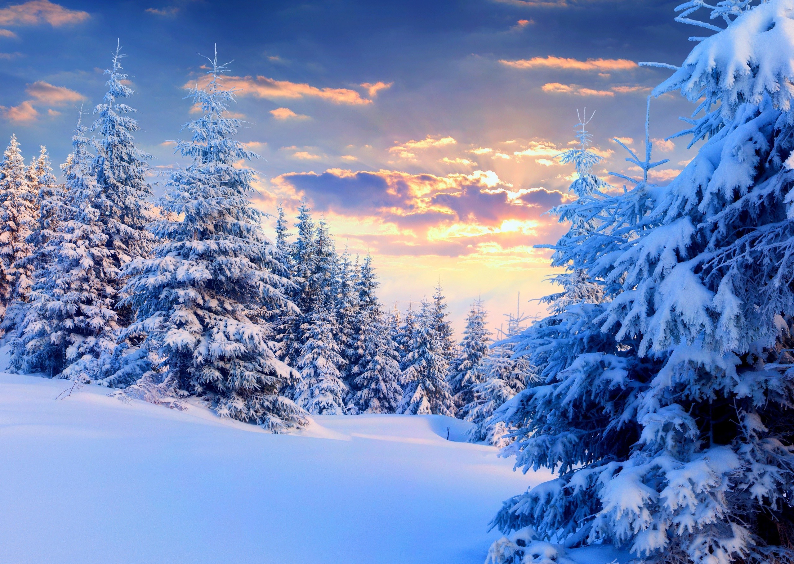 Wallpaper snow sunset winter trees forest tracks desktop