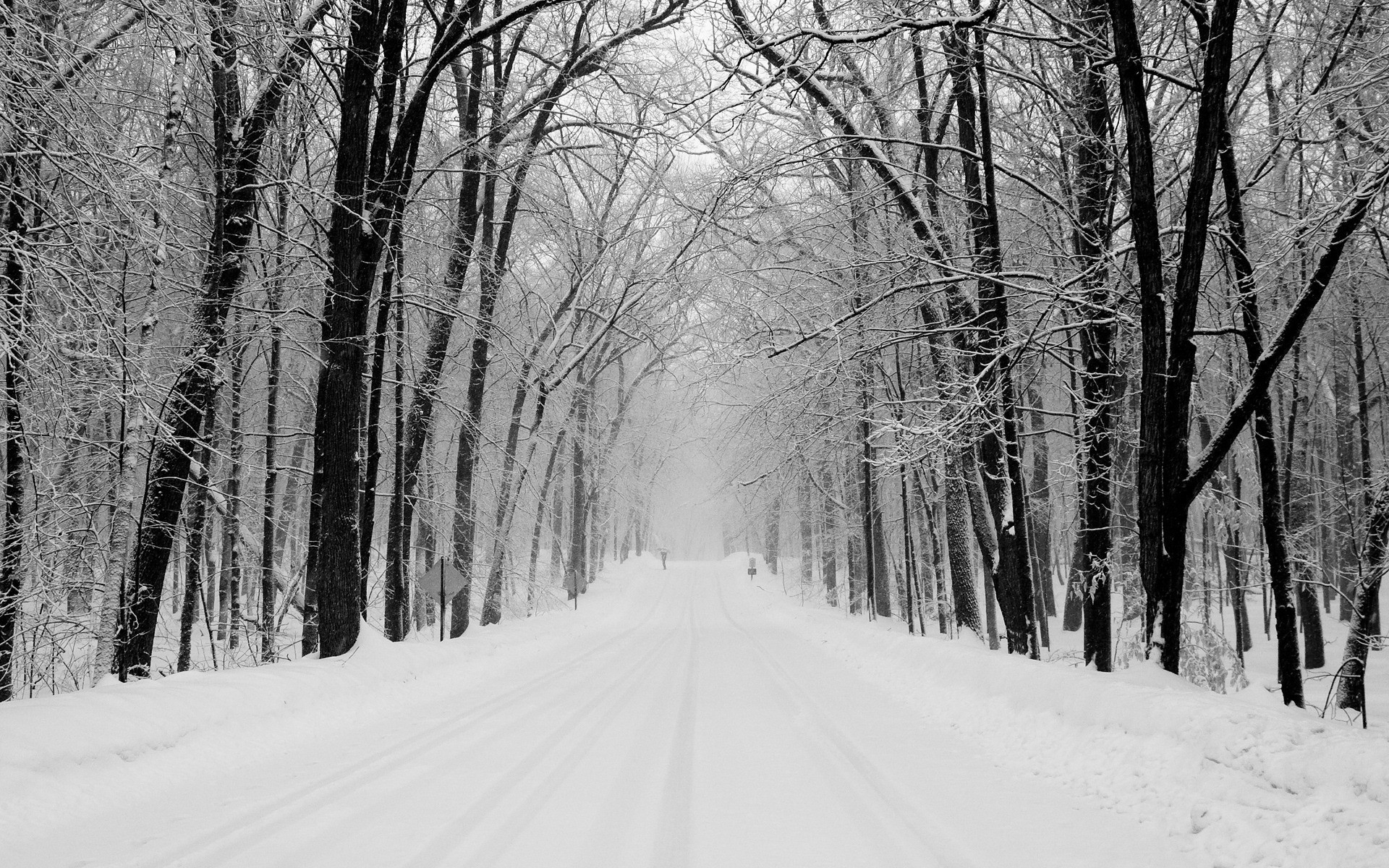 Nice Winter Forest & Path