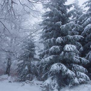 Winter Forest Desktop