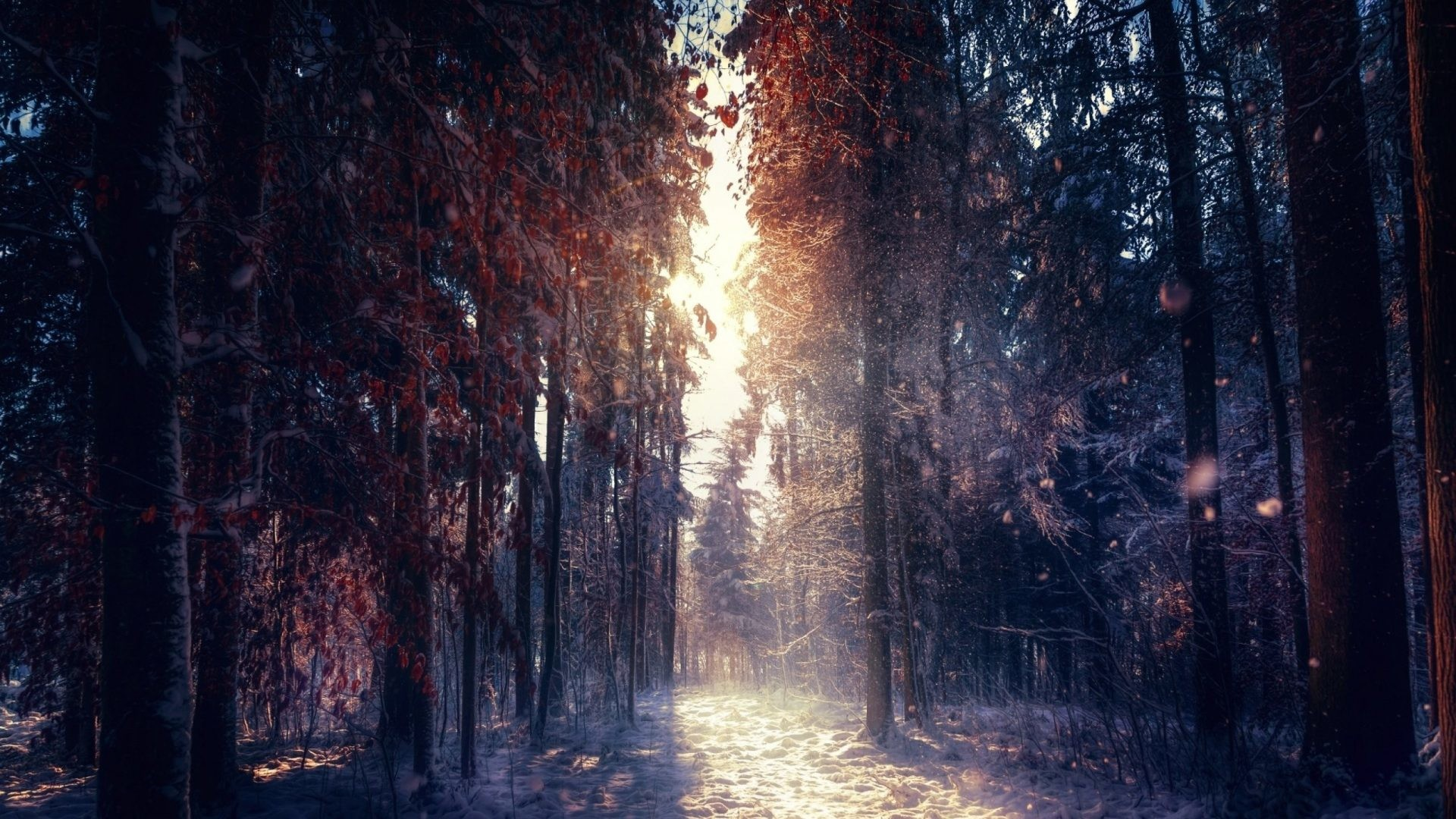 Forest Tag – Autumn Tree Winter Forest Landscape Nature New Wallpapers For  Mobile for HD 16