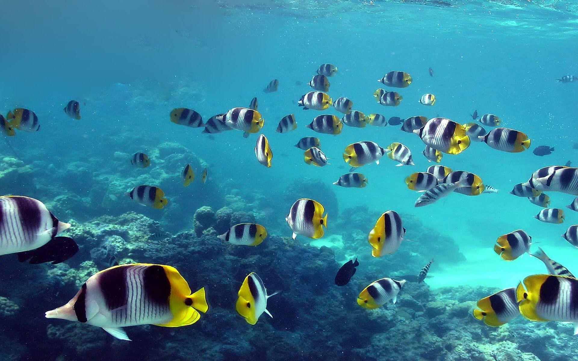 Beautiful Ocean Fish HD Wallpaper – 1939995