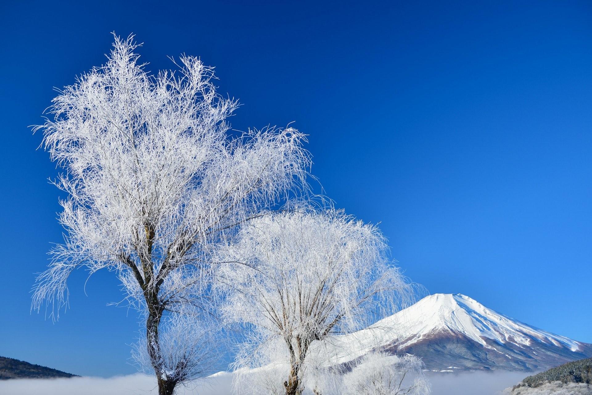 japan mount fuji sky winter tree snow